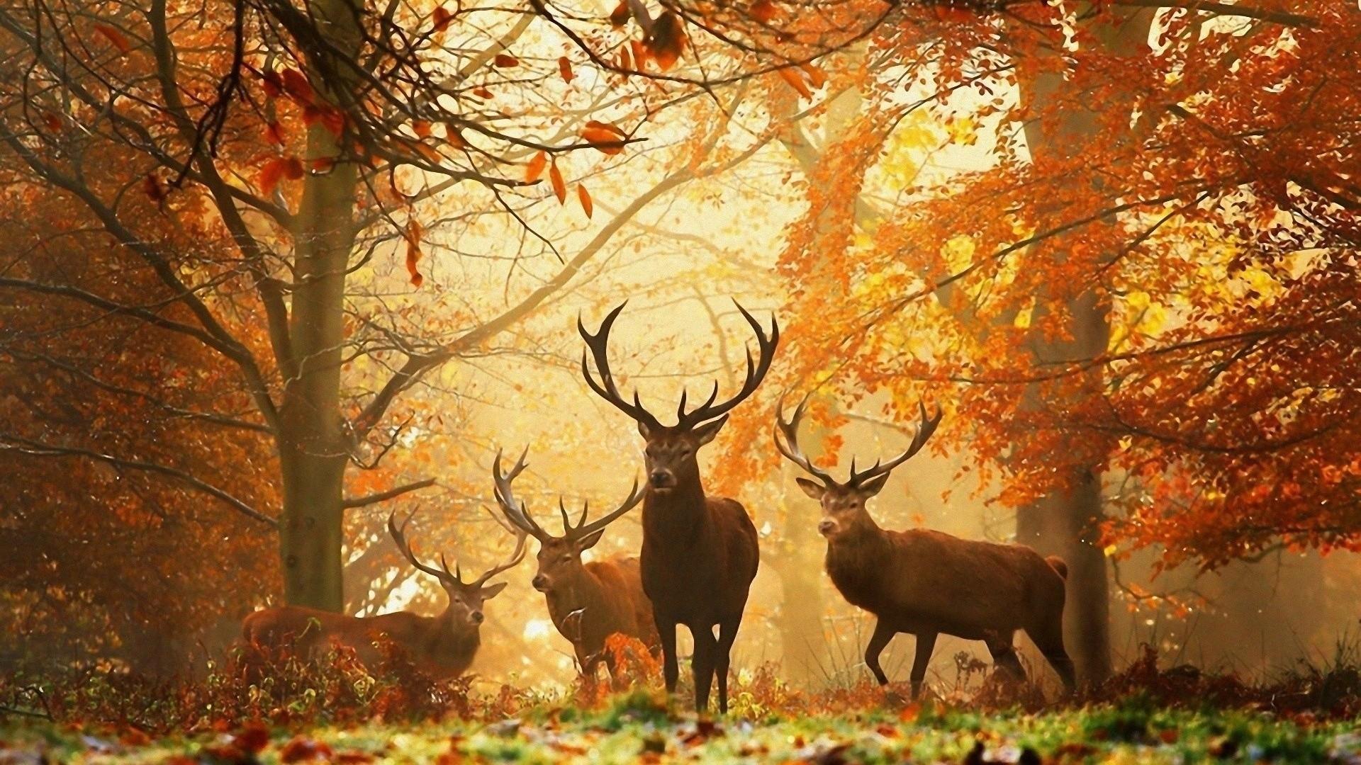 Wild Deer Wallpaper