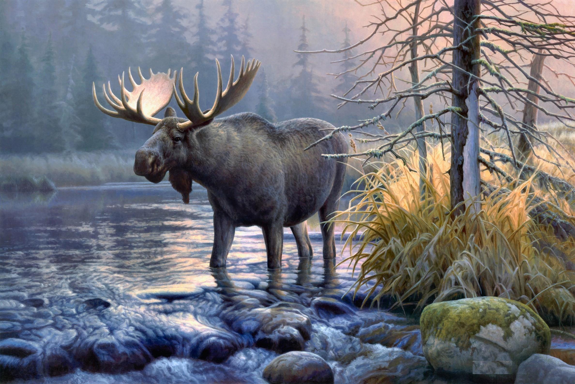 Moose HD Wallpapers | Moose Desktop Pictures | Cool Wallpapers