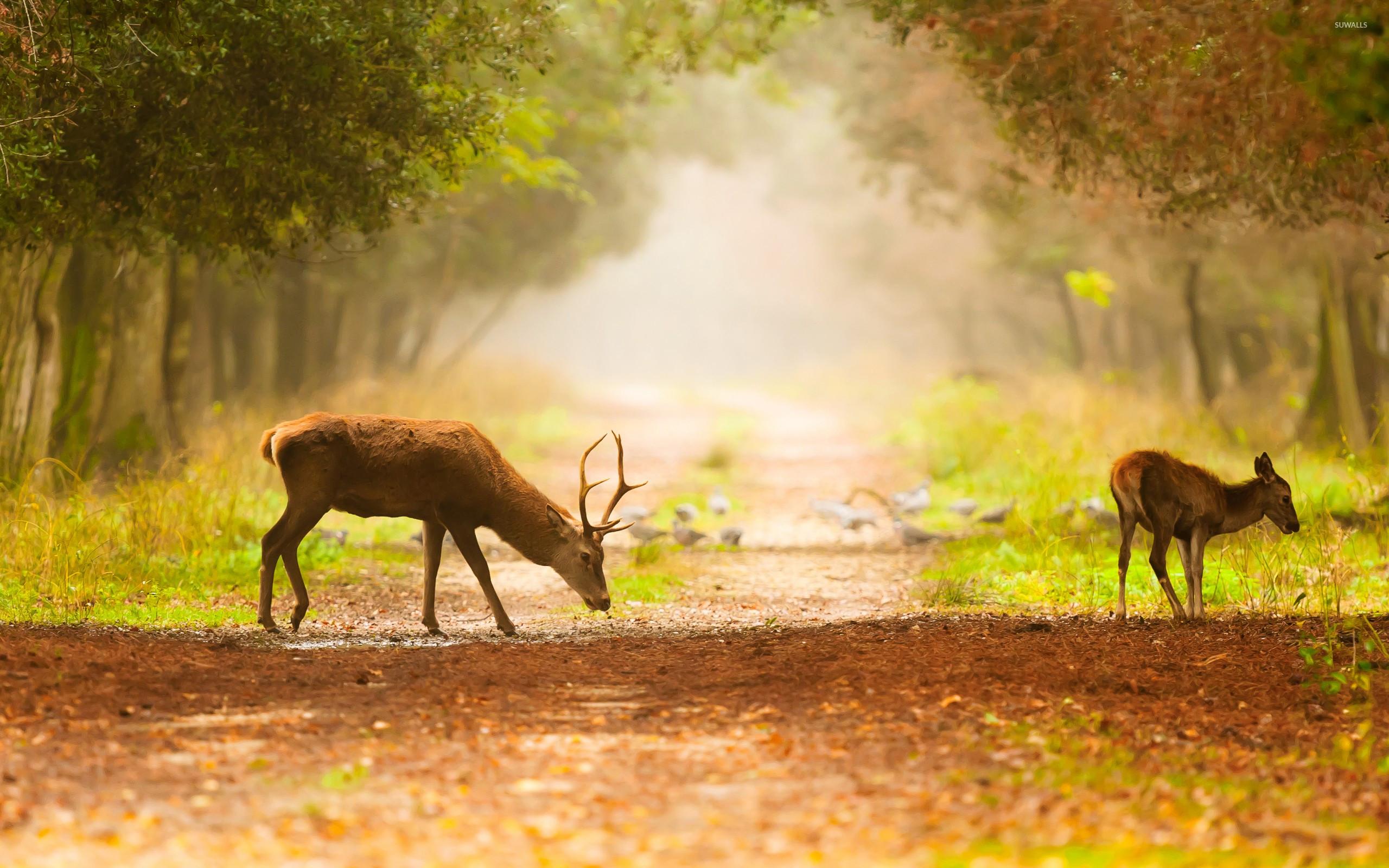 Cool Deer Wallpapers HD Wallpapers Pinterest