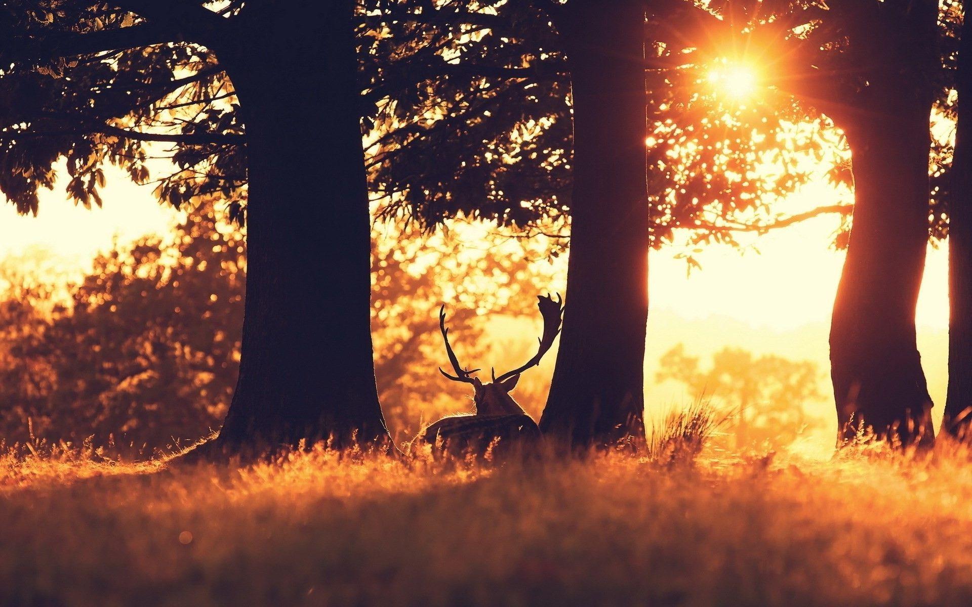deer hd wallpapers. Â«Â«