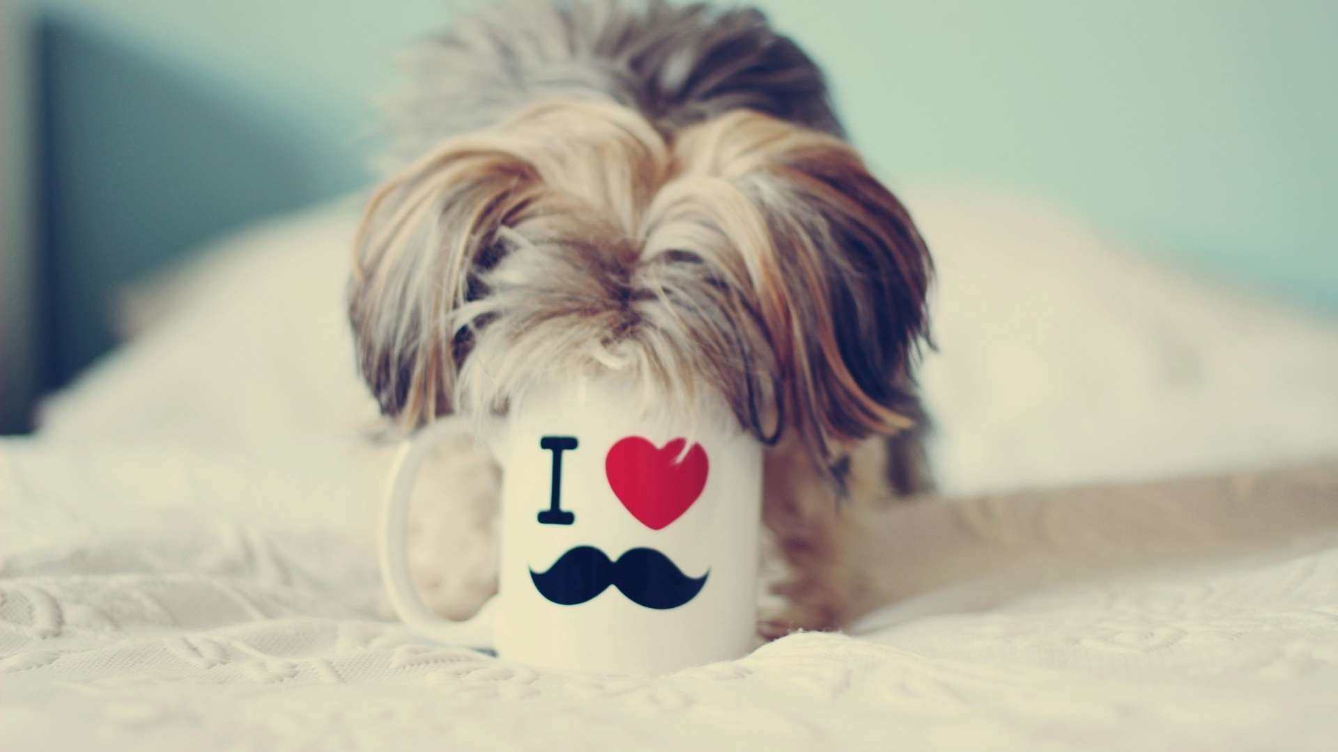 Yorkshire Terrier Love Mustache Wallpaper | HDWallWide