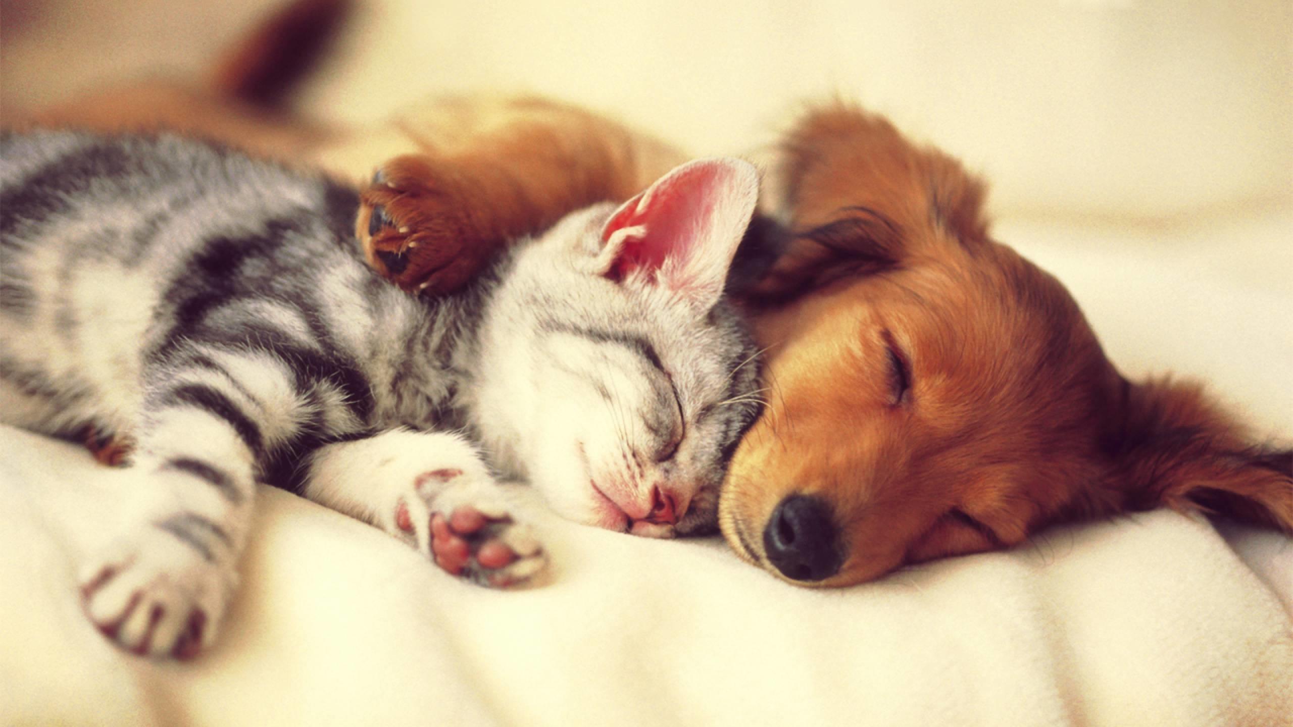 … cute cat and dog sleep wallpaper.