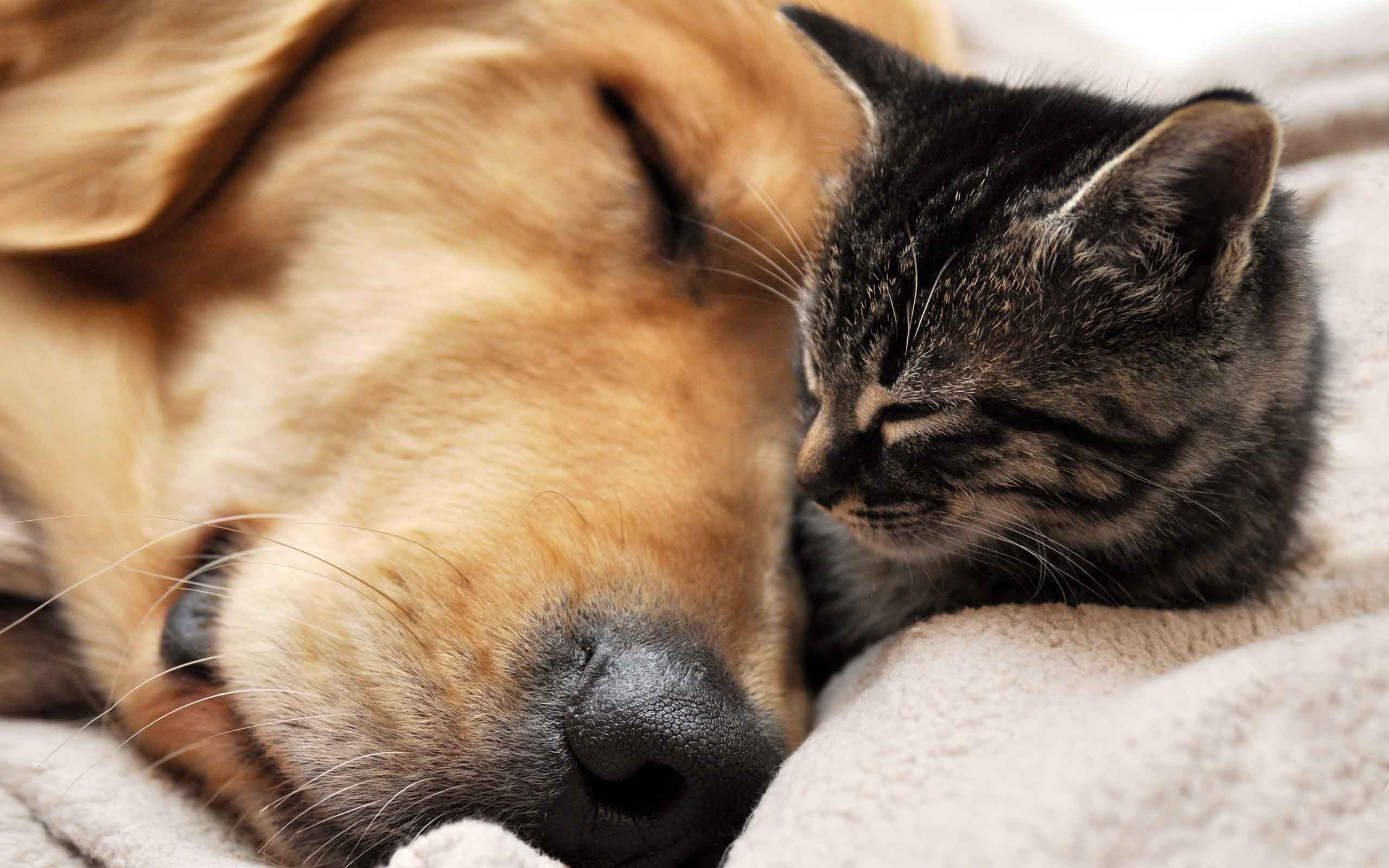 Cat and dog sleeping wallpapers and images – wallpapers, pictures .