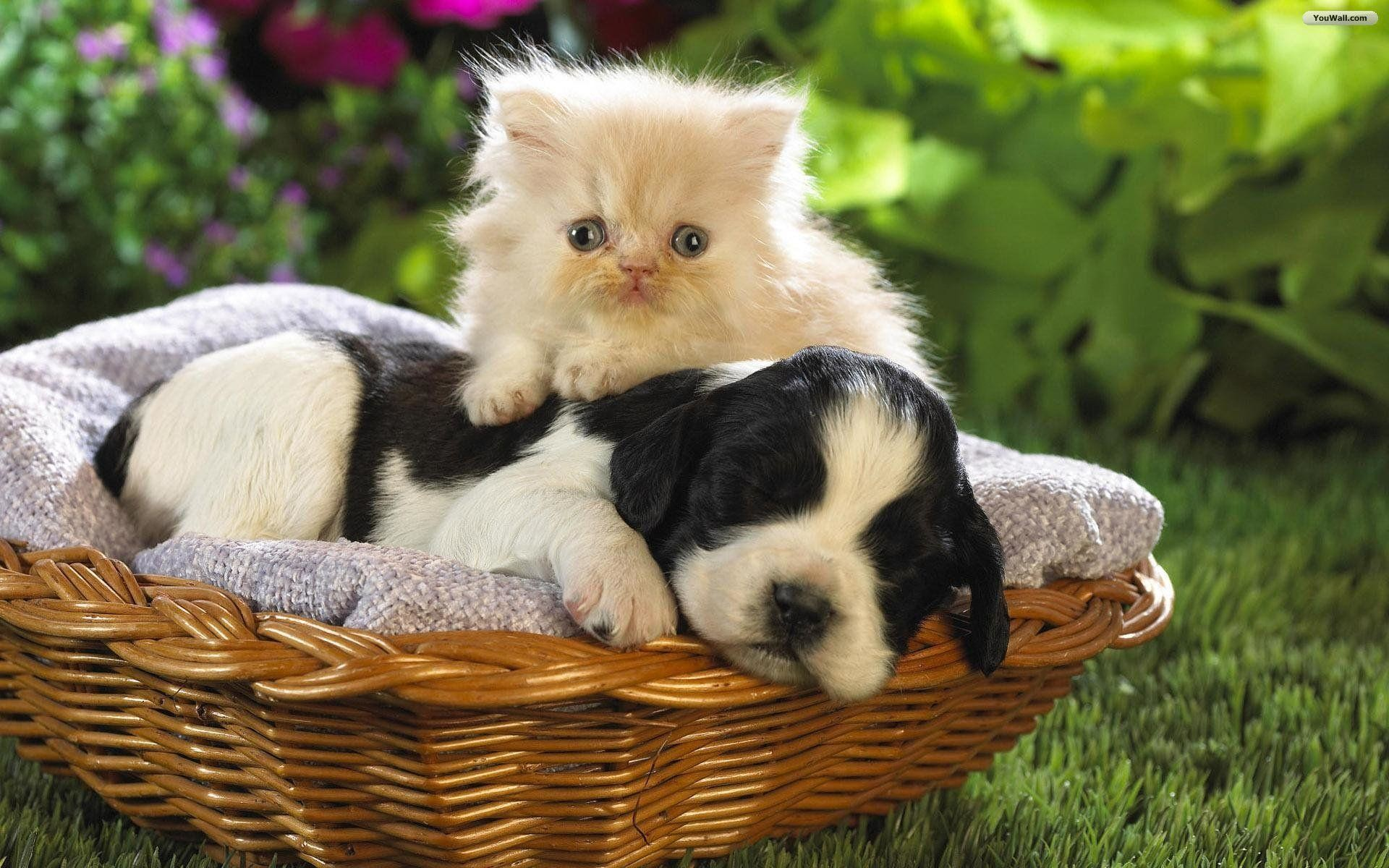 Cat And Dog Wallpaper 53 20741 High Definition Wallpapers .