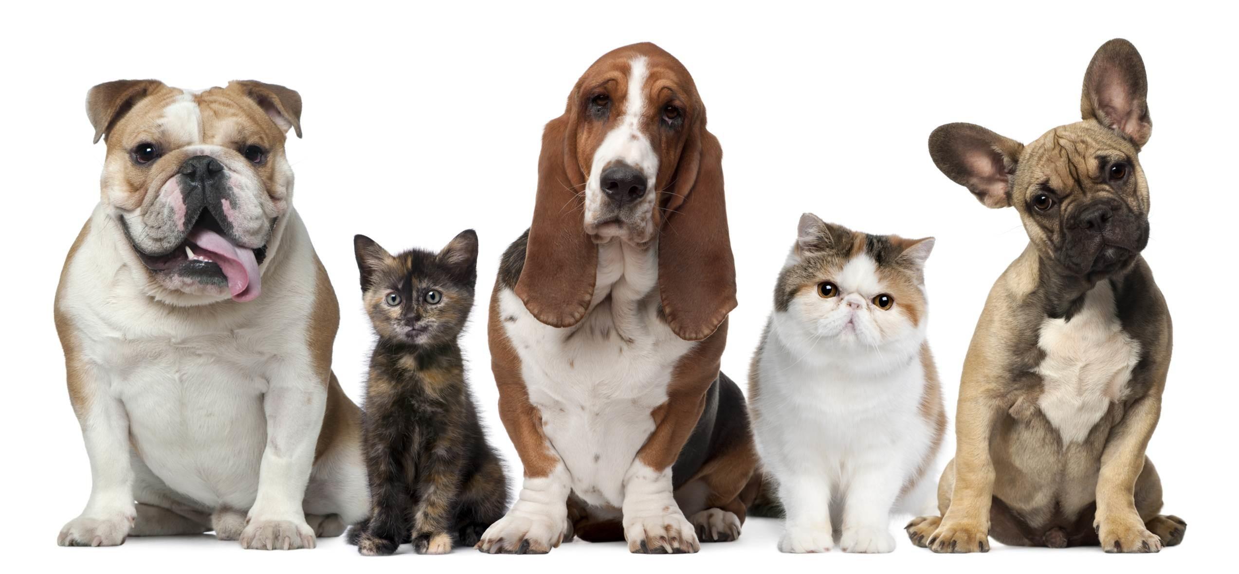 Cat & Dog Wallpaper
