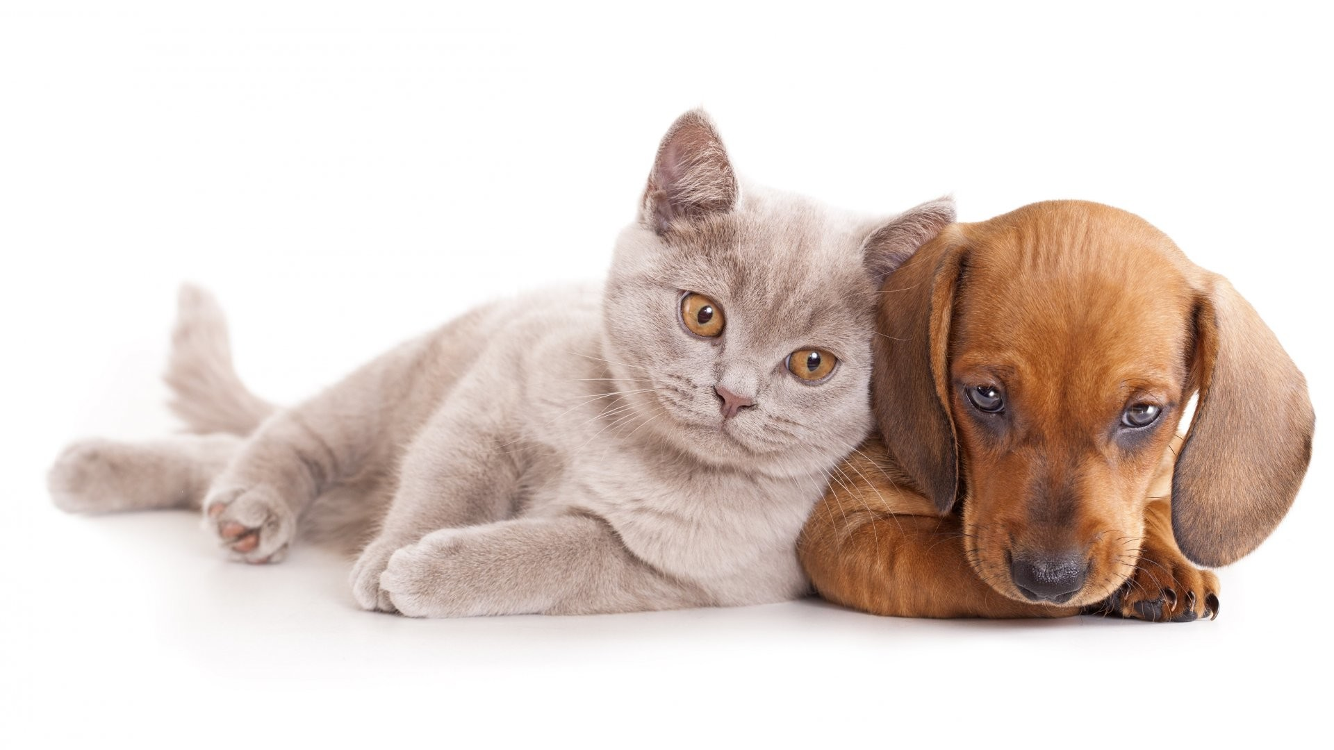 Best Cute cat dog free stock photos download