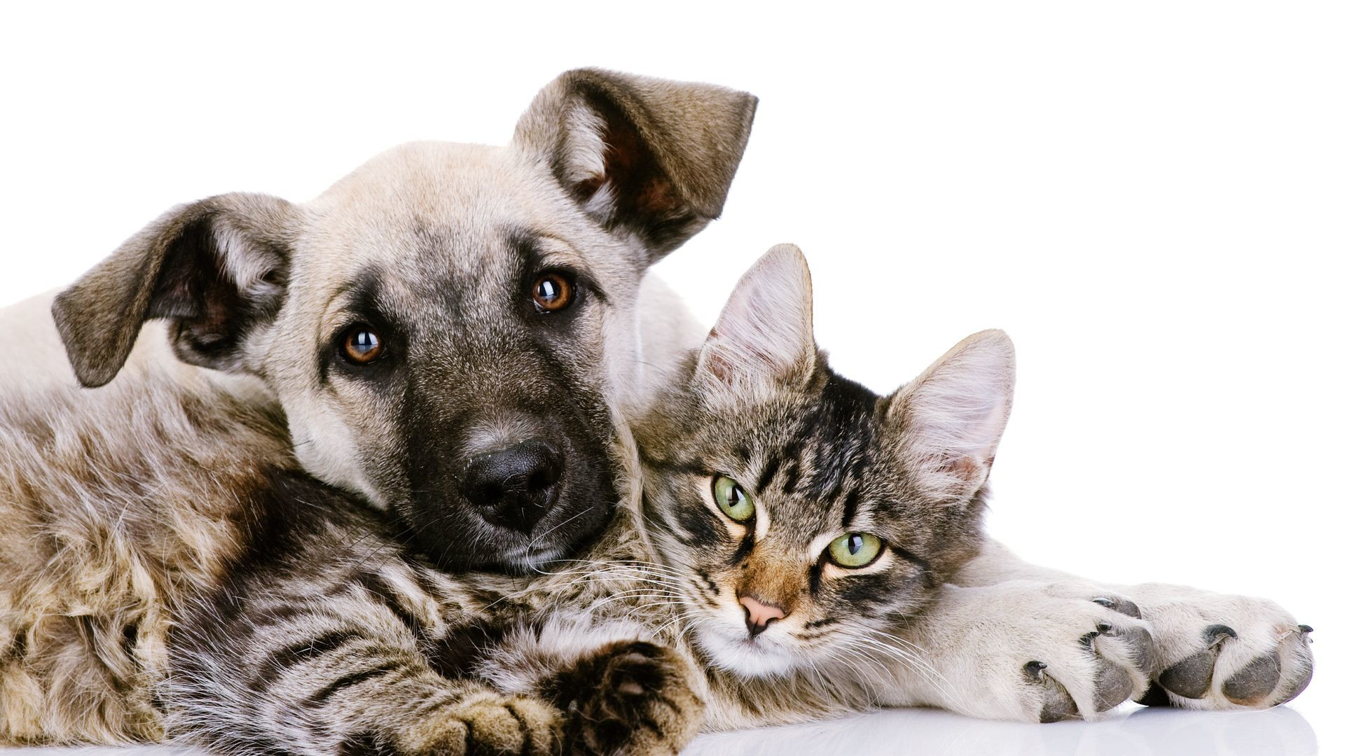 Cat And Dog wallpapers