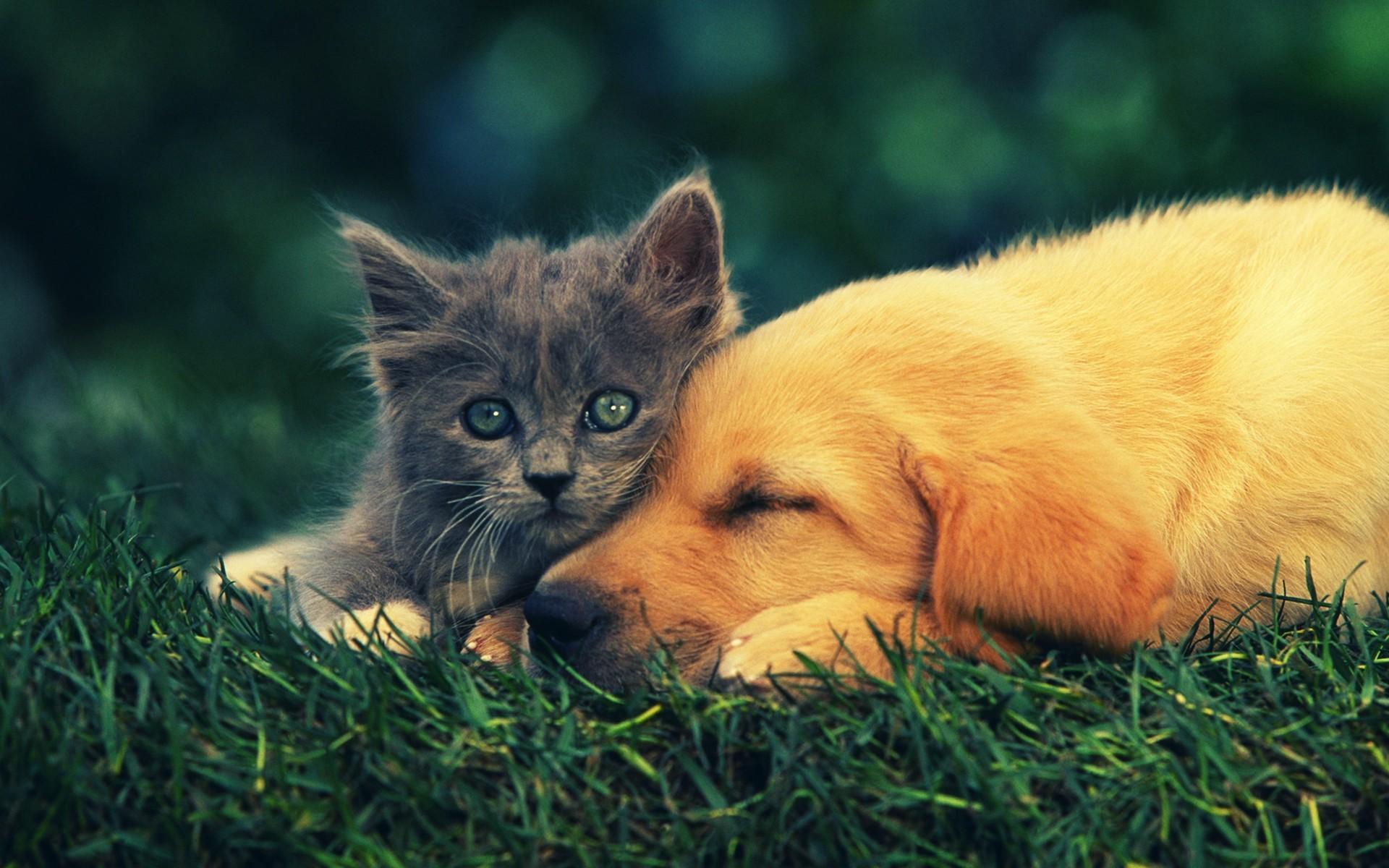 Animal Cat Kitten Animal Wallpaper | Tierbabys, Tierkinder, Wallpapers  Tiere, Animals Wallpapers | Pinterest | Cat photography, Animal wallpaper  and Cat