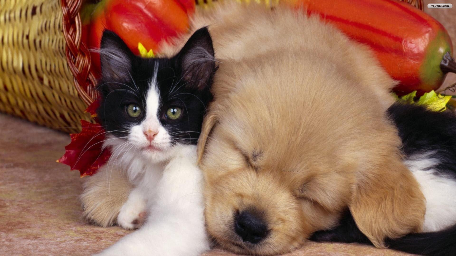 Cute-cat-and-dog-wallpaper