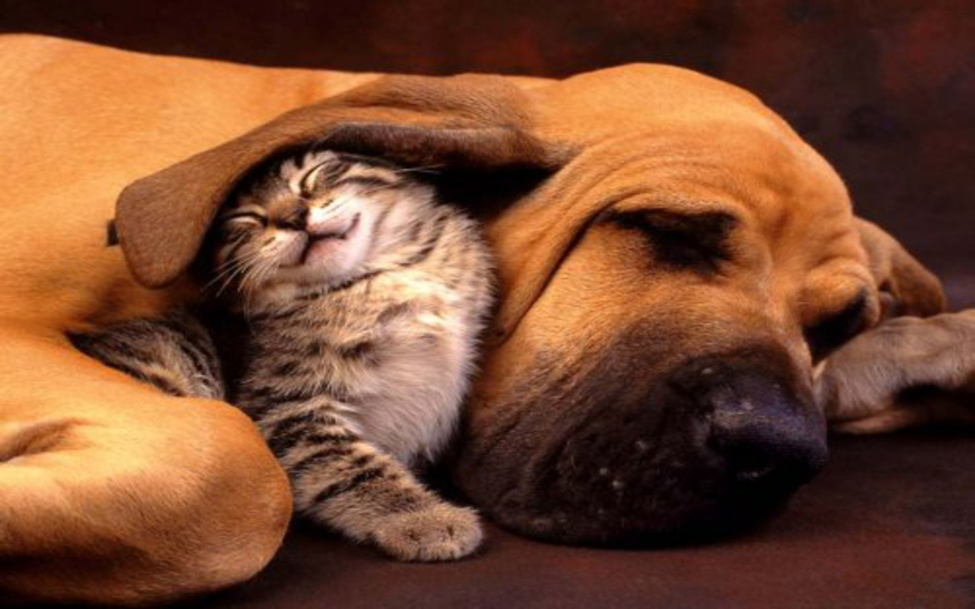 dog-and-cat-wallpaper-23 | Collection Of Picture