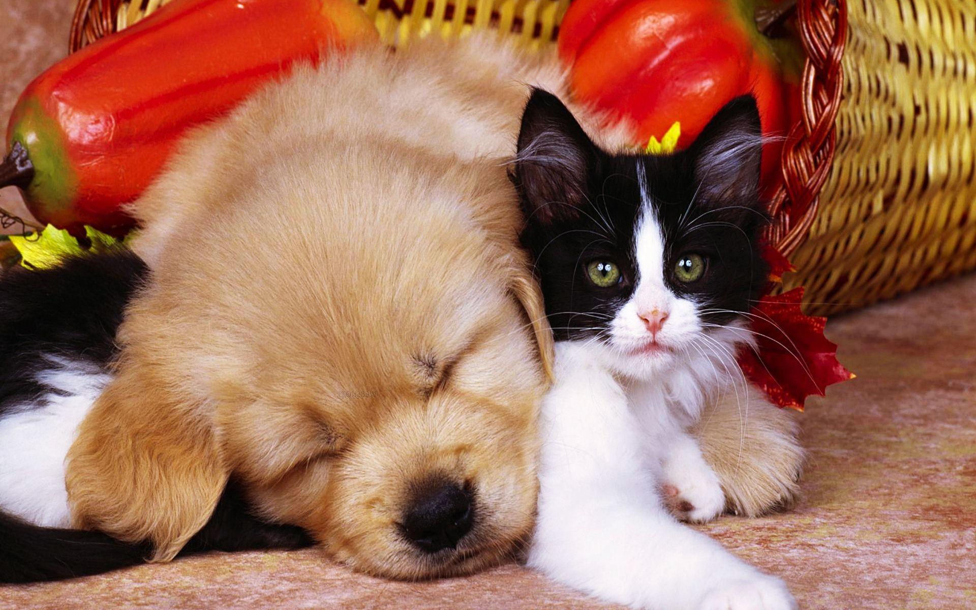 Pics Photos Free Download Pets Pic Cat And Dog Wallpaper