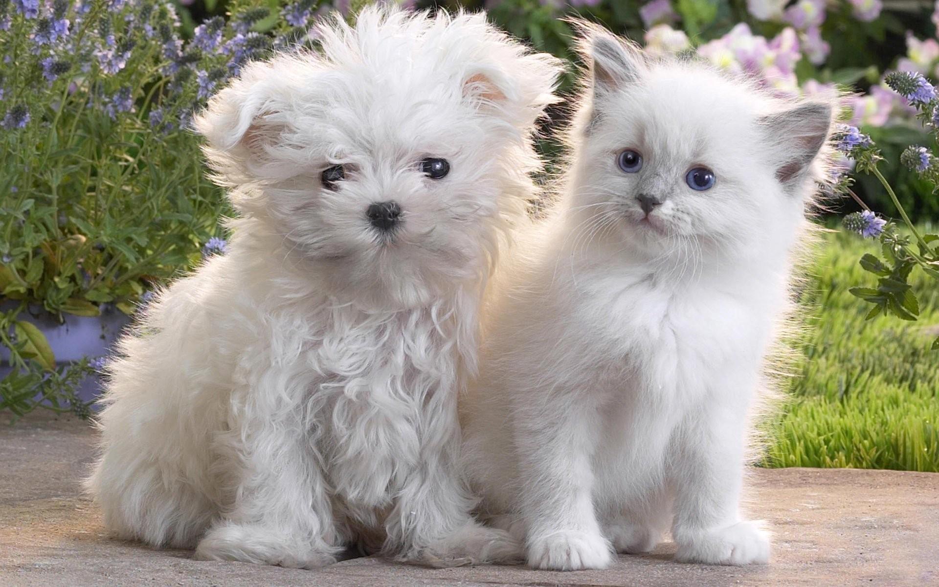 cute dog cat kitten puppy dog cat puppy kitten fluffy