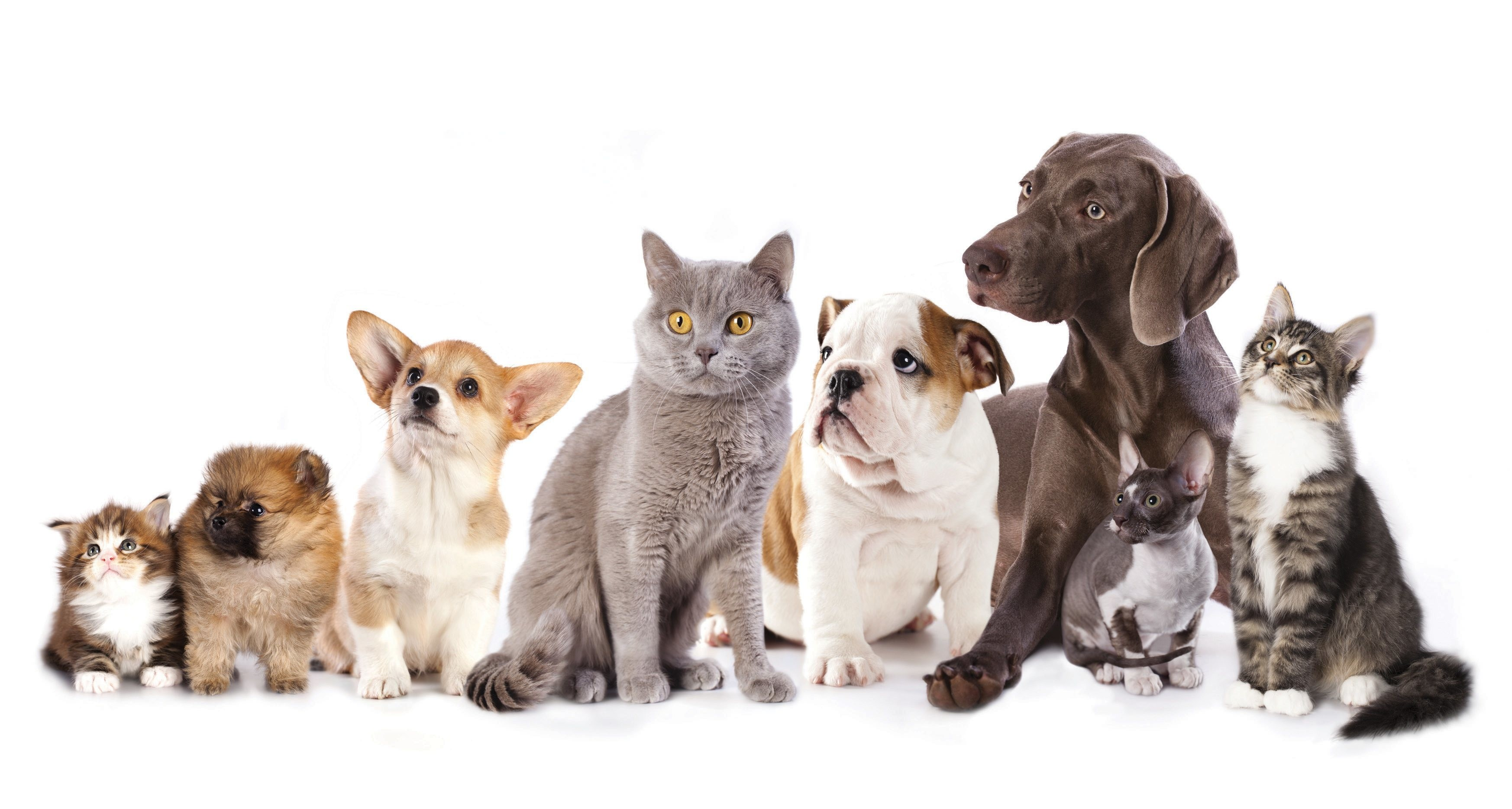 Dog And Cat Populations Are Approaching Human Numbers – Where Are .