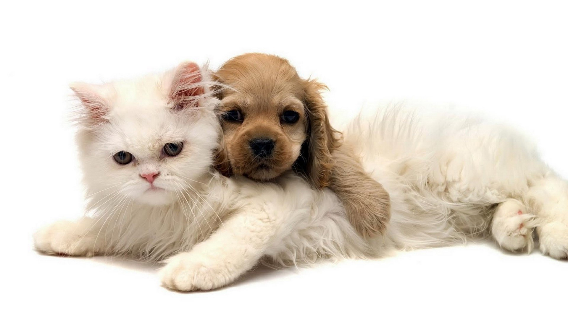 cats and kittens and dogs and puppies images gallery – PETS . …