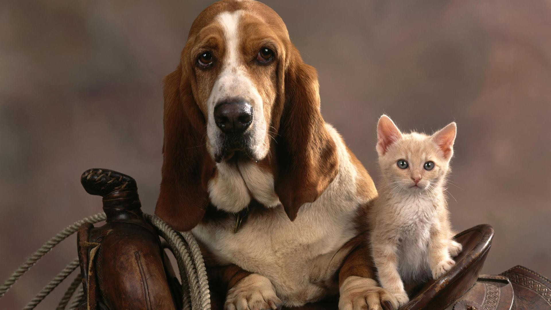 … Wallpaper Of Cute Cats And Dogs Cat And Dog Wallpapers – Wallpaper …