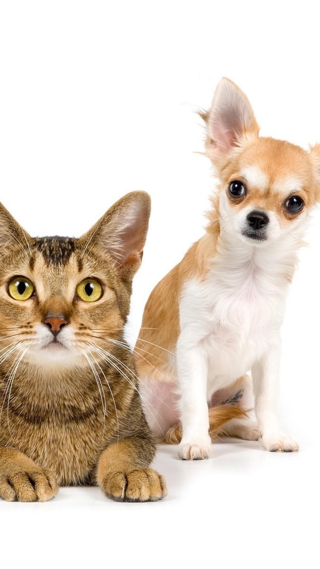 Wallpaper cat, dog, friends, couple, photo shoot