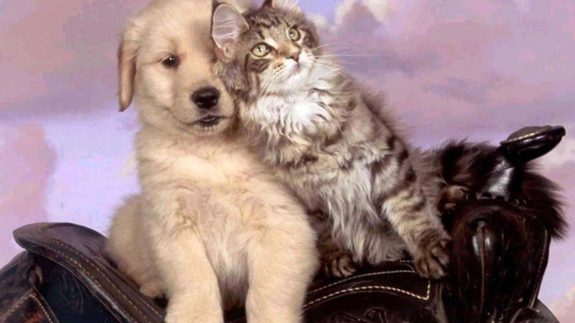 49 Dog And Cat