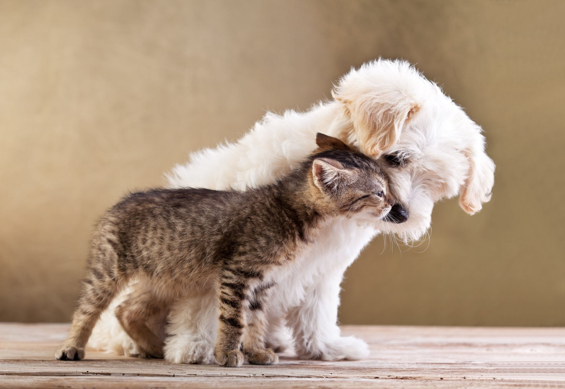 friends small dog and cat together puppy kitten love friends small dog cat  puppy kitten love