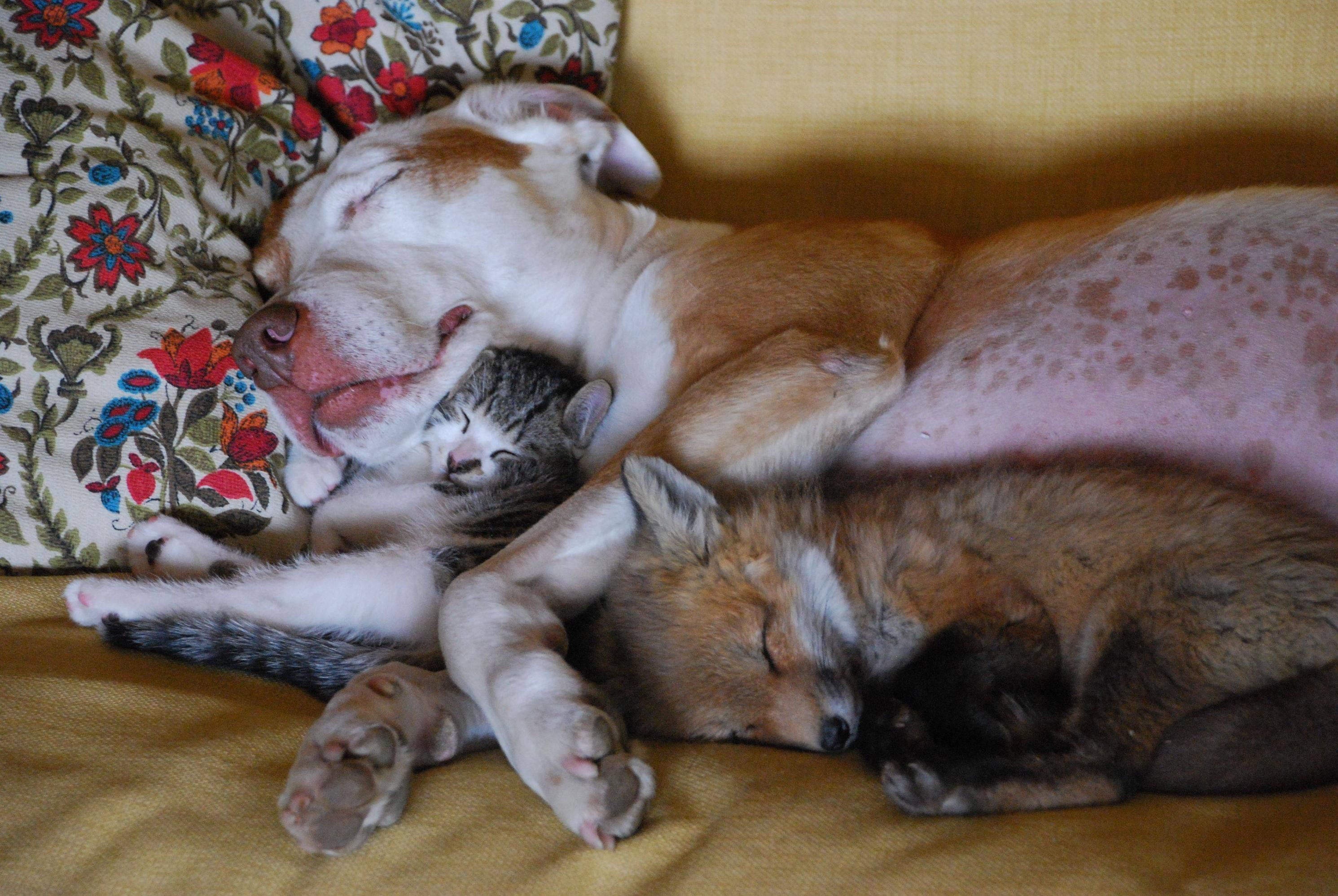 Dog, Cat…