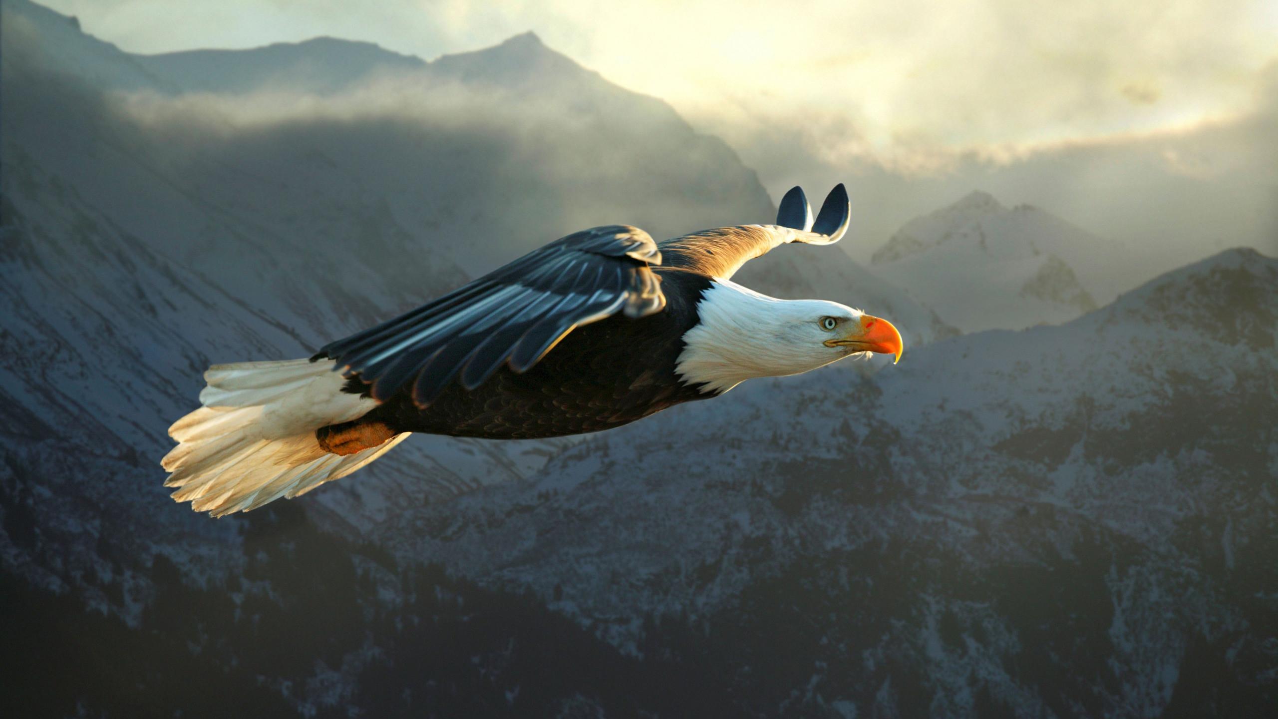 Animal – Eagle Wallpaper