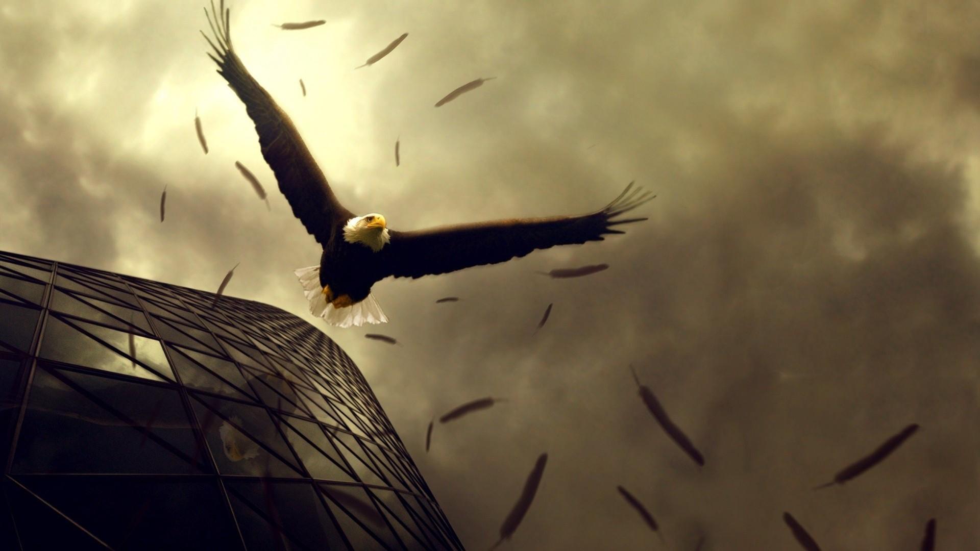 Download Flying Bald Eagle wallpaper