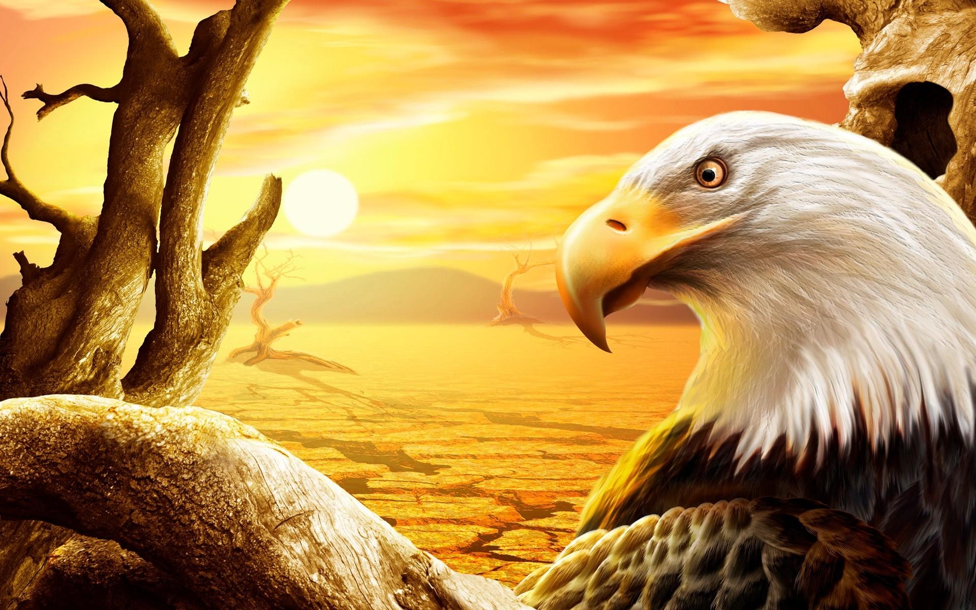 Eagle Wallpaper Images PC Laptop Eagle Photos in FHDKKC