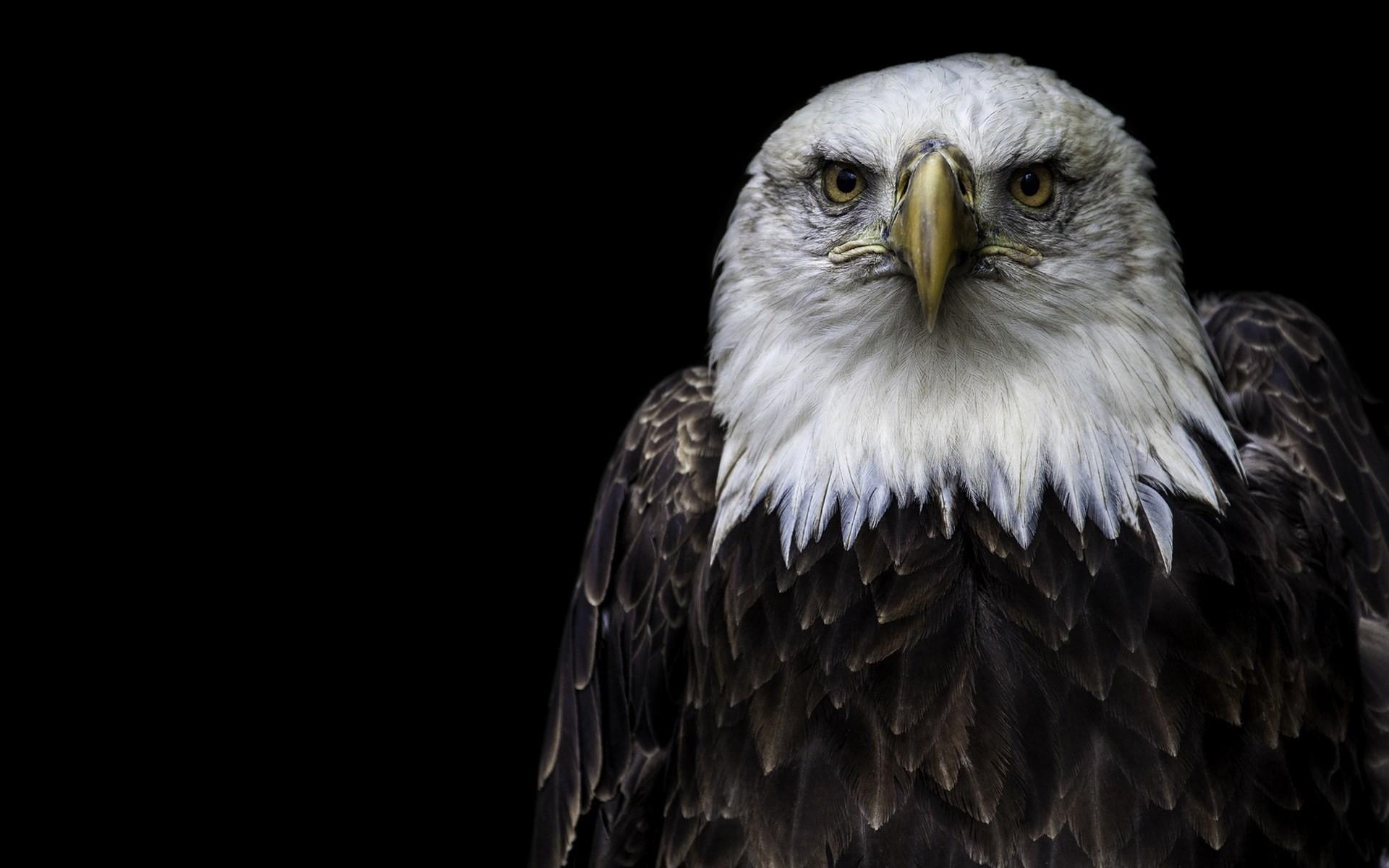 Free computer bald eagle wallpaper, Hollis Peacock 2017-03-04