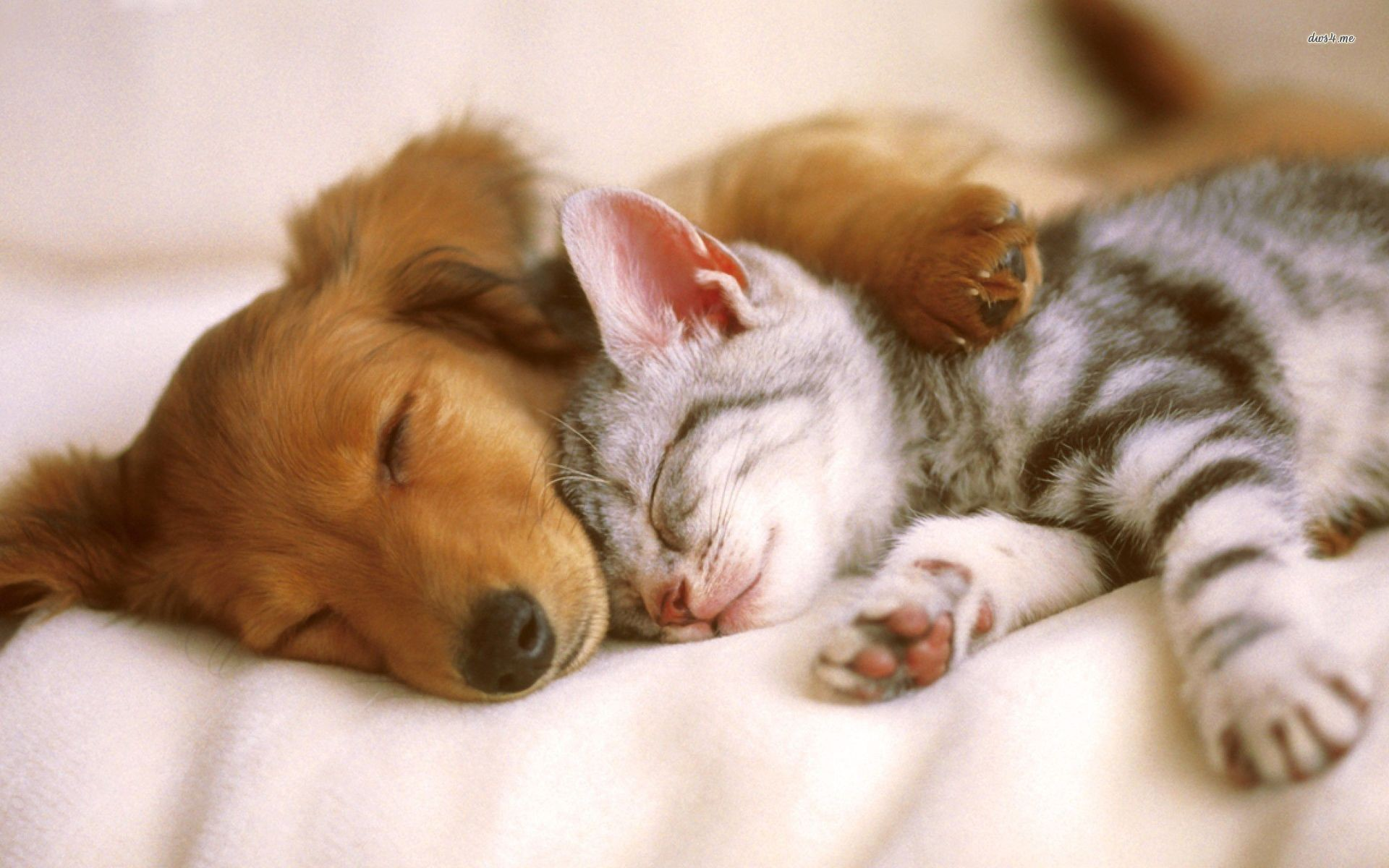 Cute Baby Puppies and Kittens Sleeping id: 4186 – 7HDWallpapers