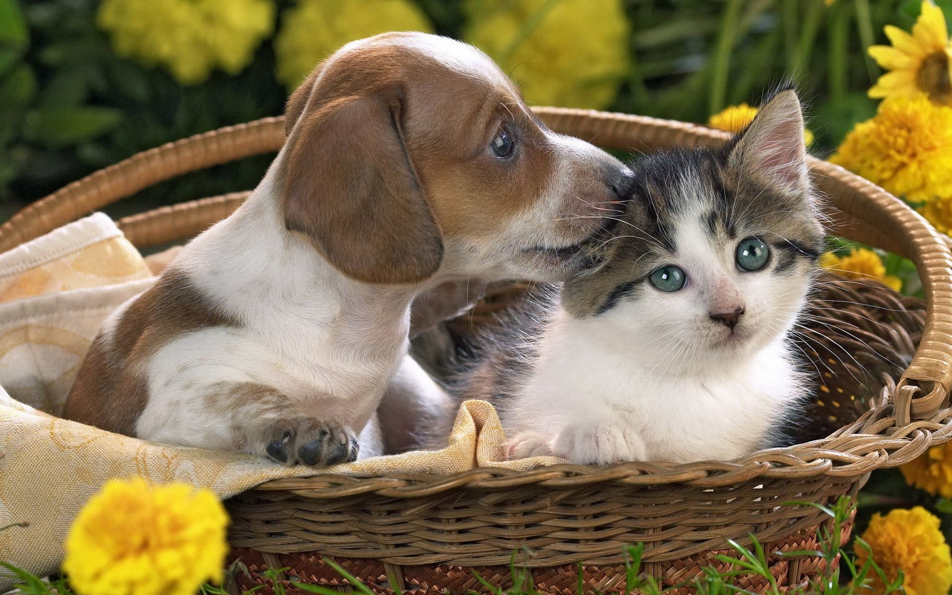 kitten and puppy – The Cutest Kittens