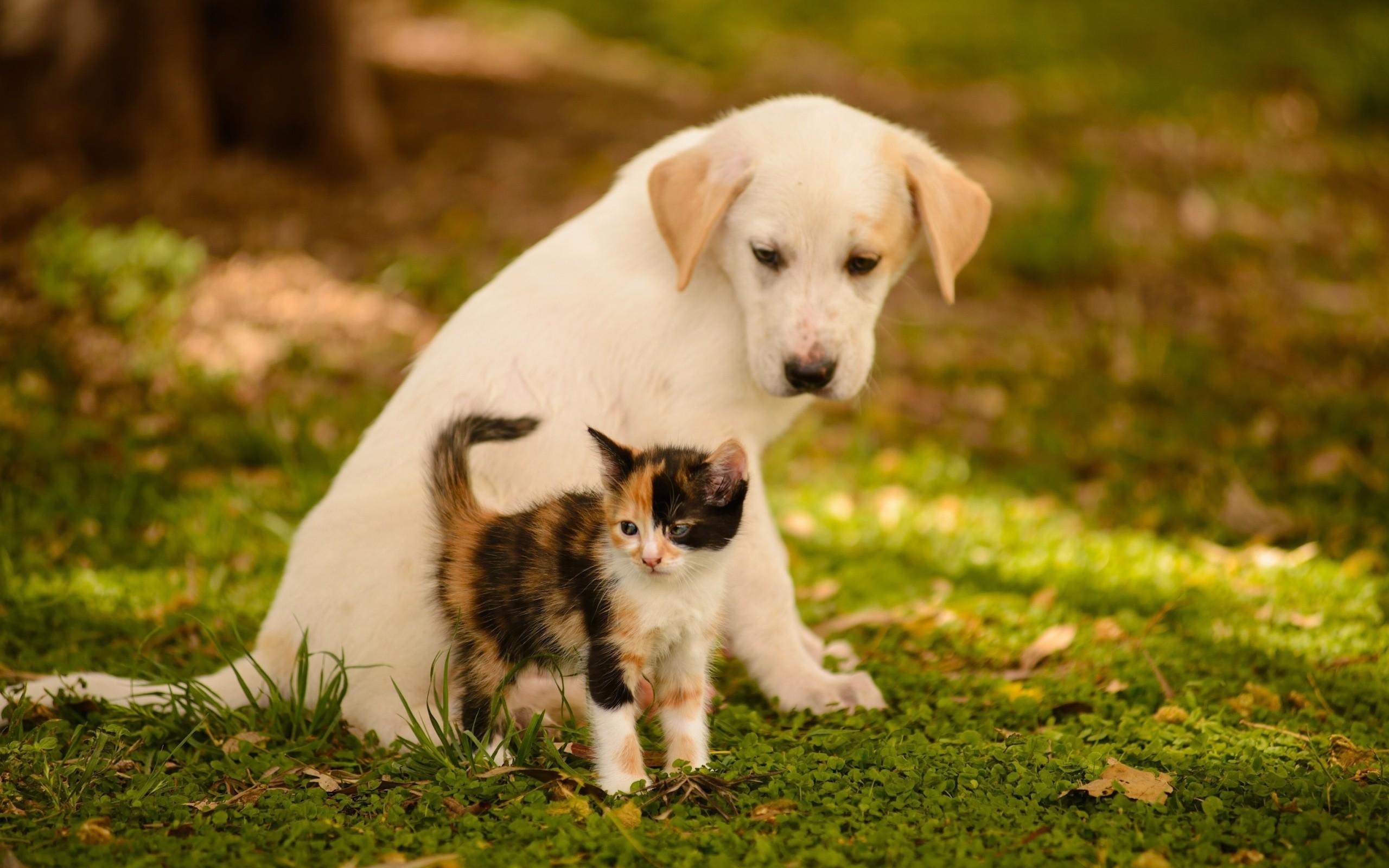 Animal – Cute Animal Dog Cat Puppy Kitten Wallpaper