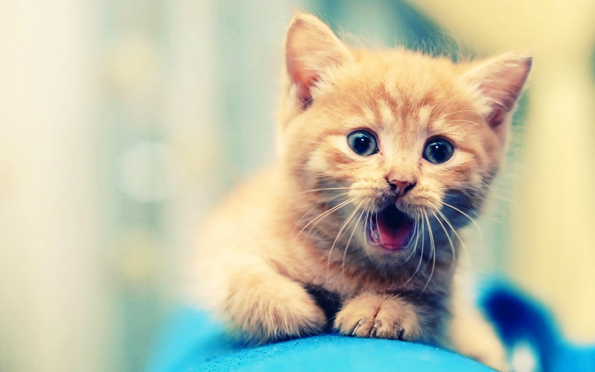 Kitten Wallpaper Phone