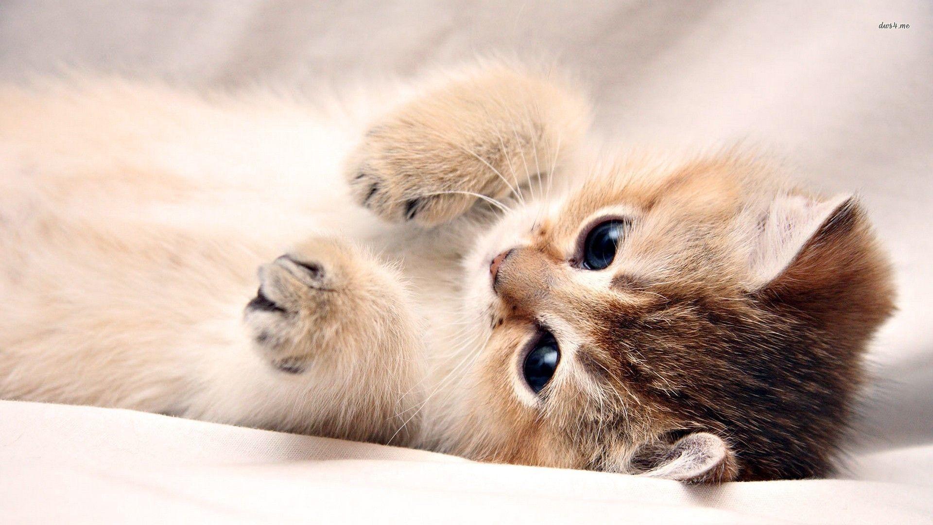 Wallpaper Kittens – WallpaperSafari