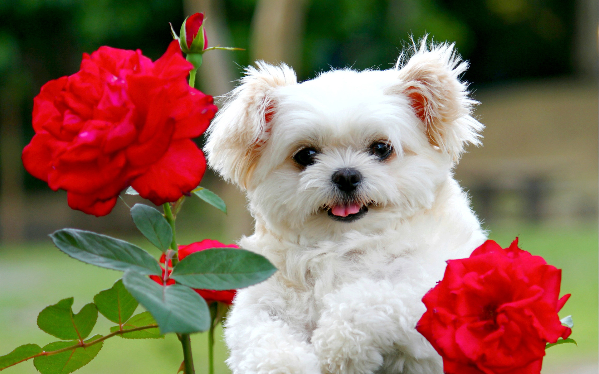 Cute Kittens And Puppies Together Wallpaper The Cutest Puppies