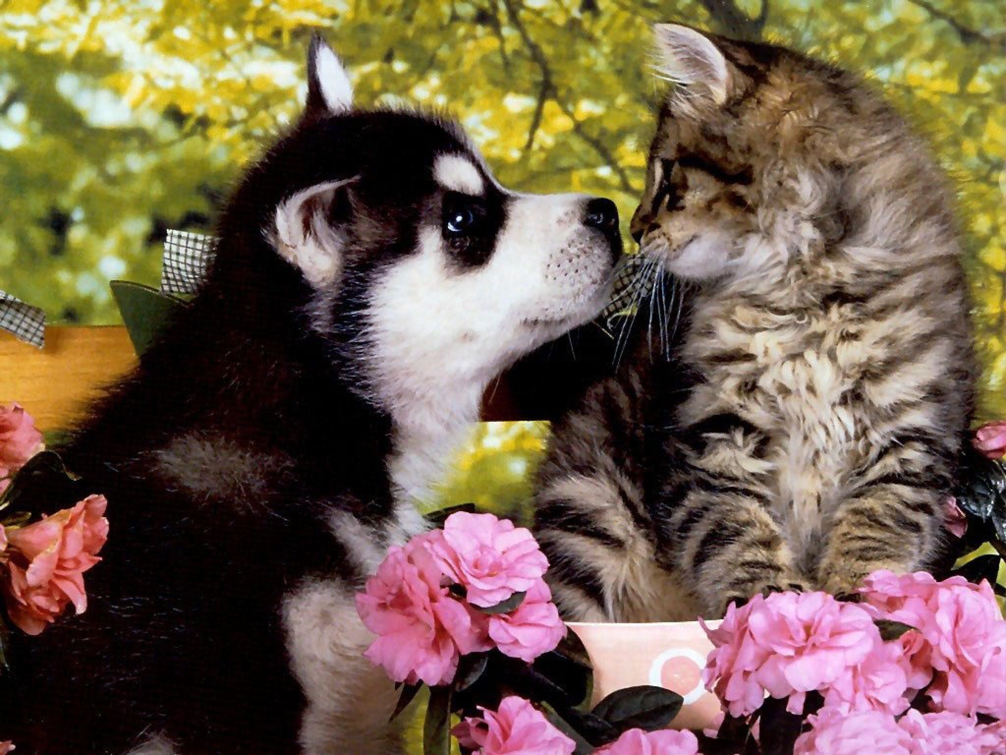 Cute friends – Puppies and kittens Wallpapers and Images – Desktop .