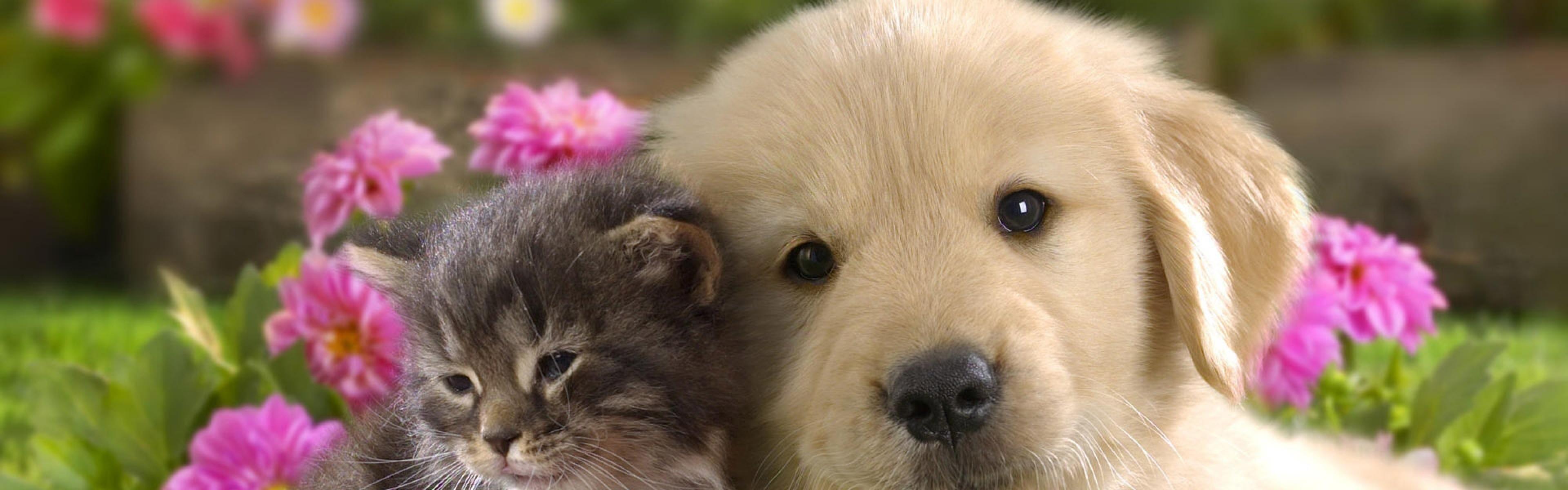 Download Wallpaper Puppy, Kitten, Grass, Flowers, Couple .