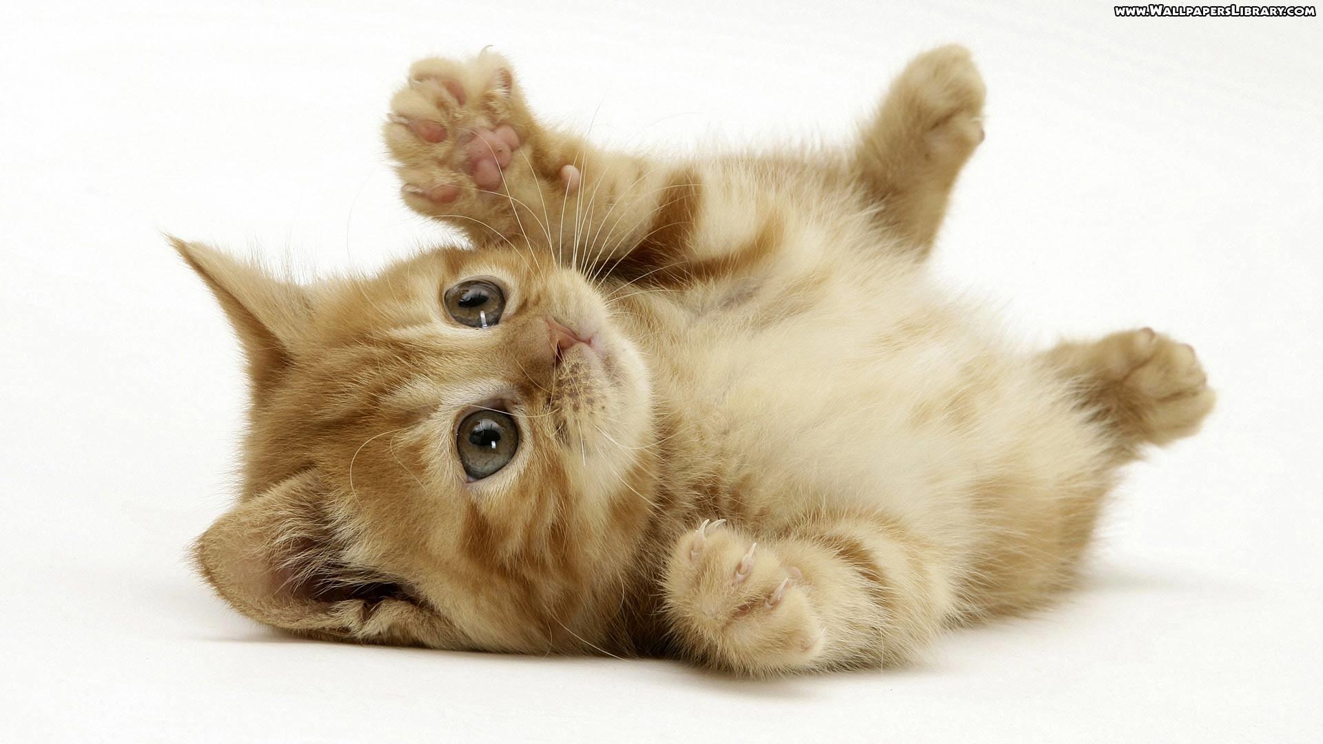 high definition kitten wallpaper / high definition backgrounds