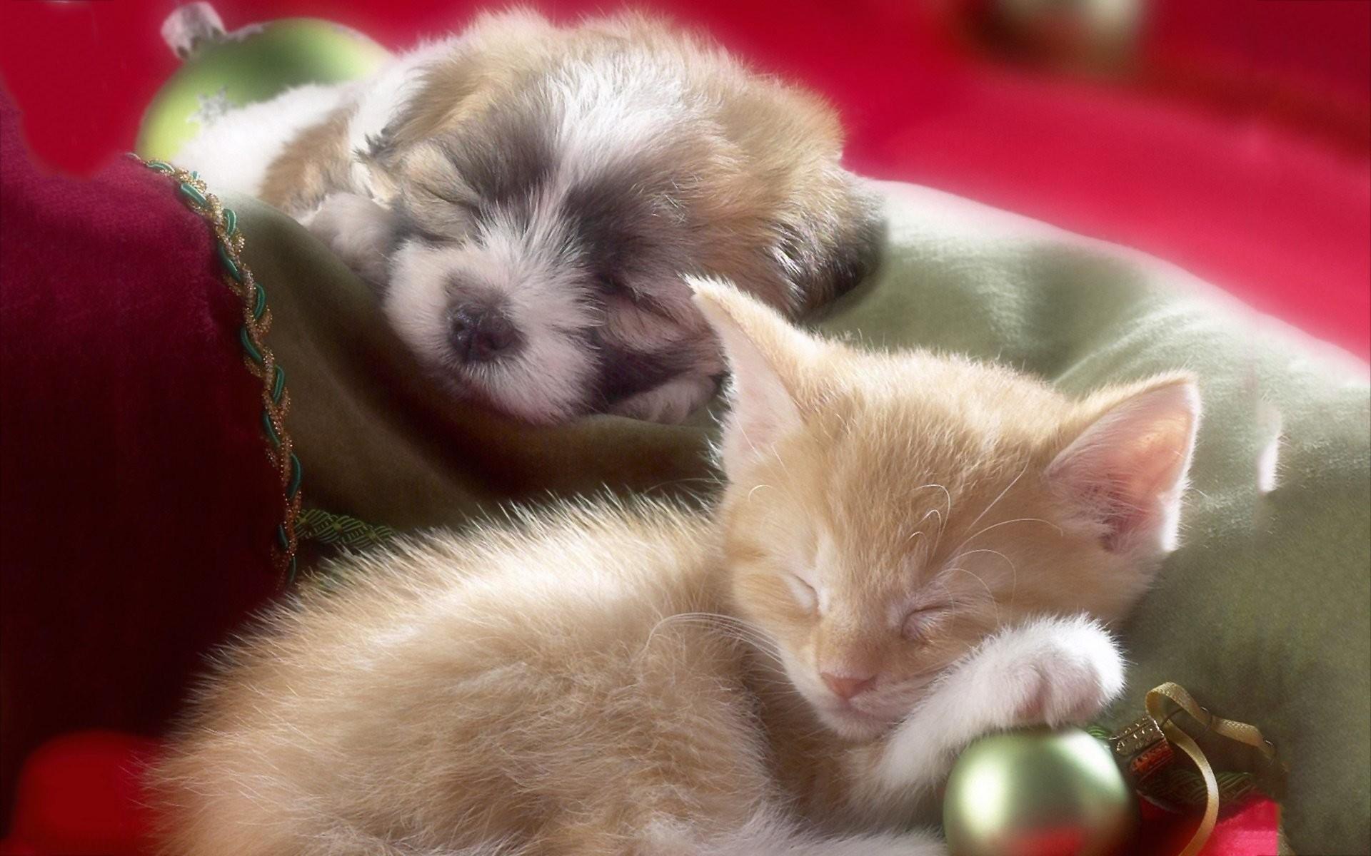 Puppy Kitten 745095
