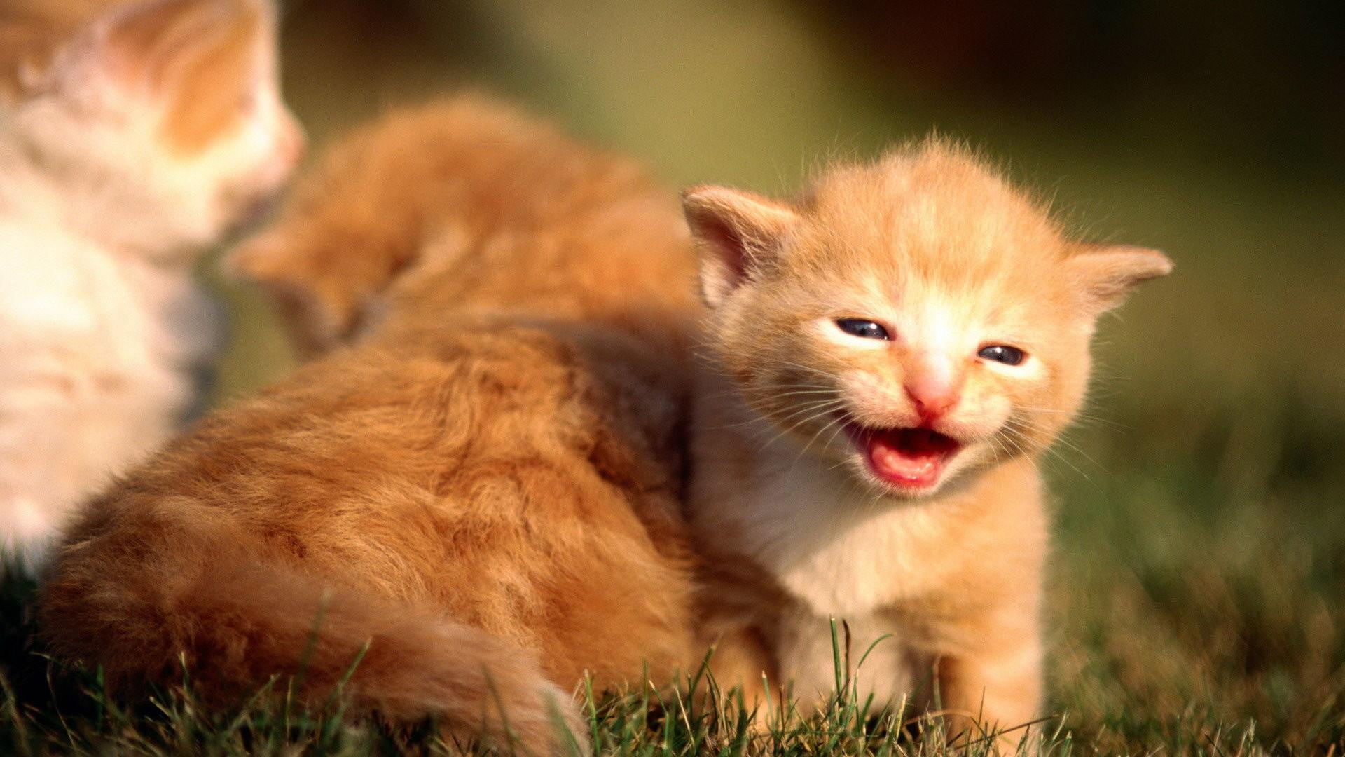 Cute Kittens Wallpaper Hd