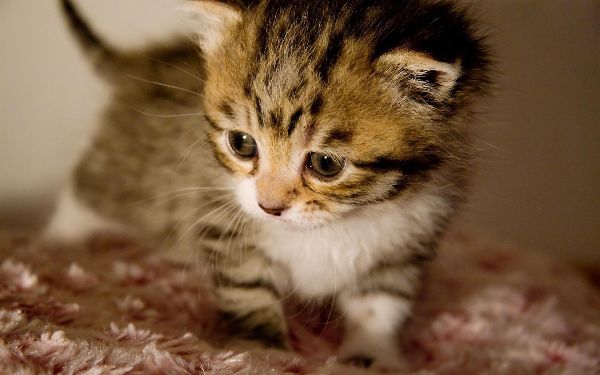Cute Kitten Backgrounds Wallpaper | Wallpaper Download