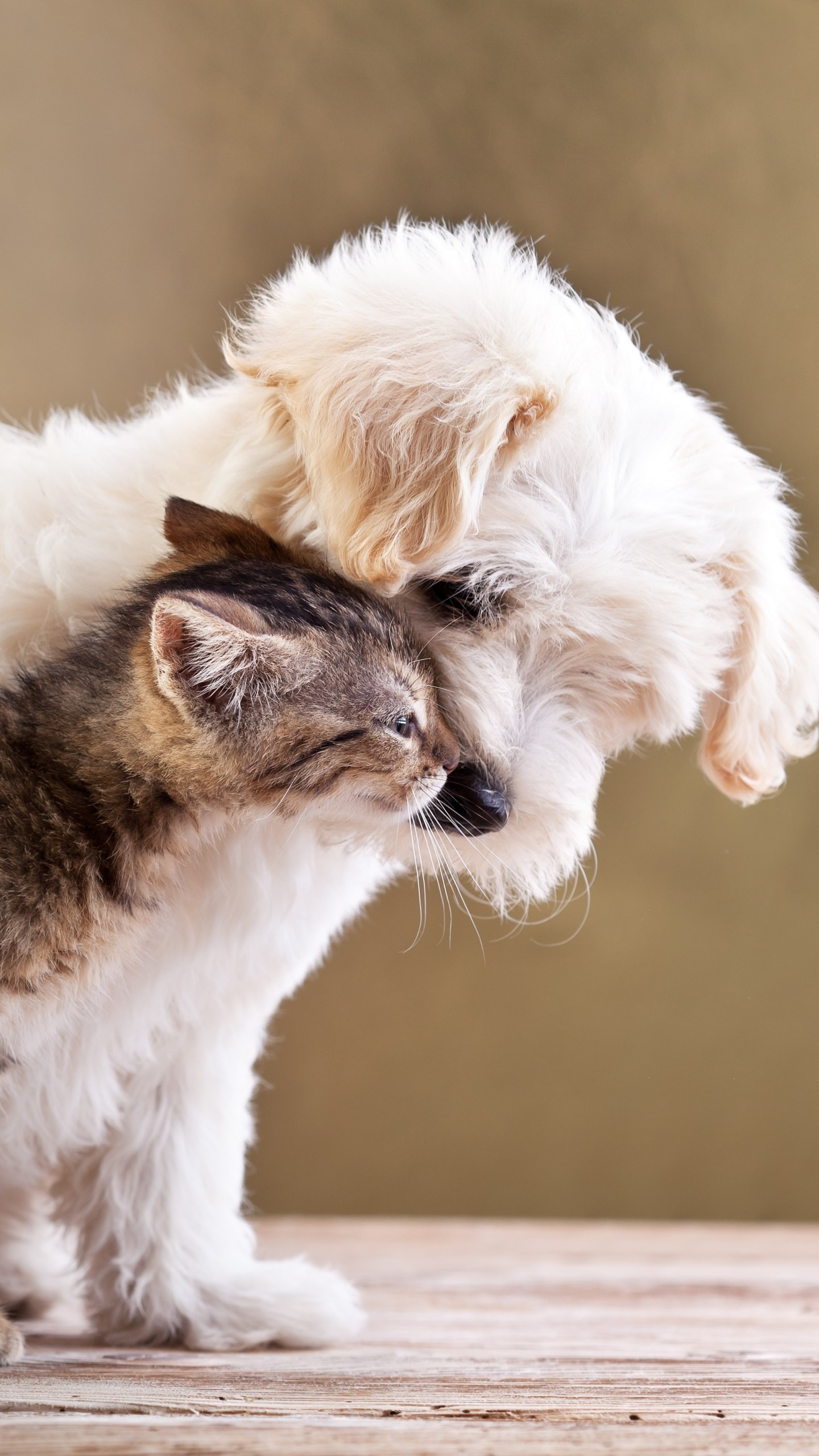 55+ Cute Puppy and Kitten