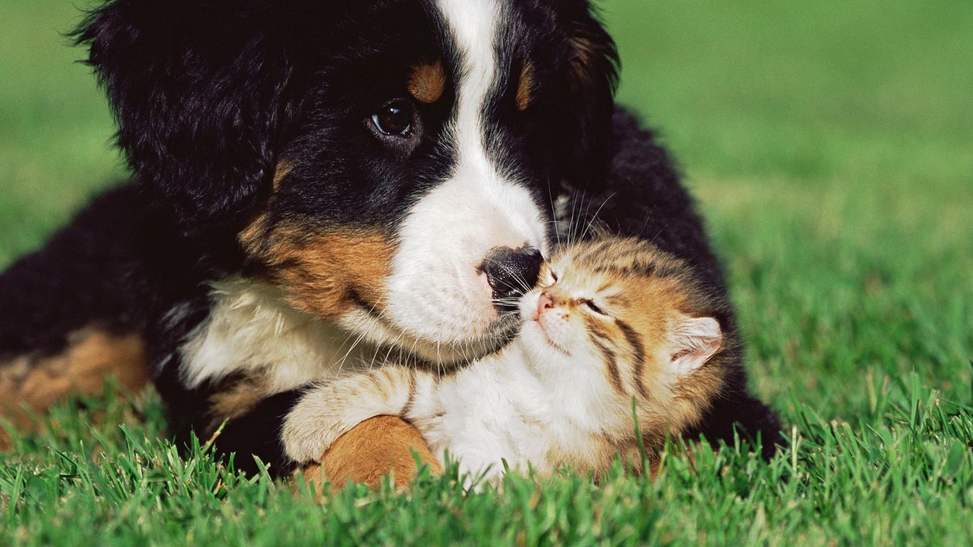 Cats Dogs Kittens Grass Animals puppy cute love wallpaper | .