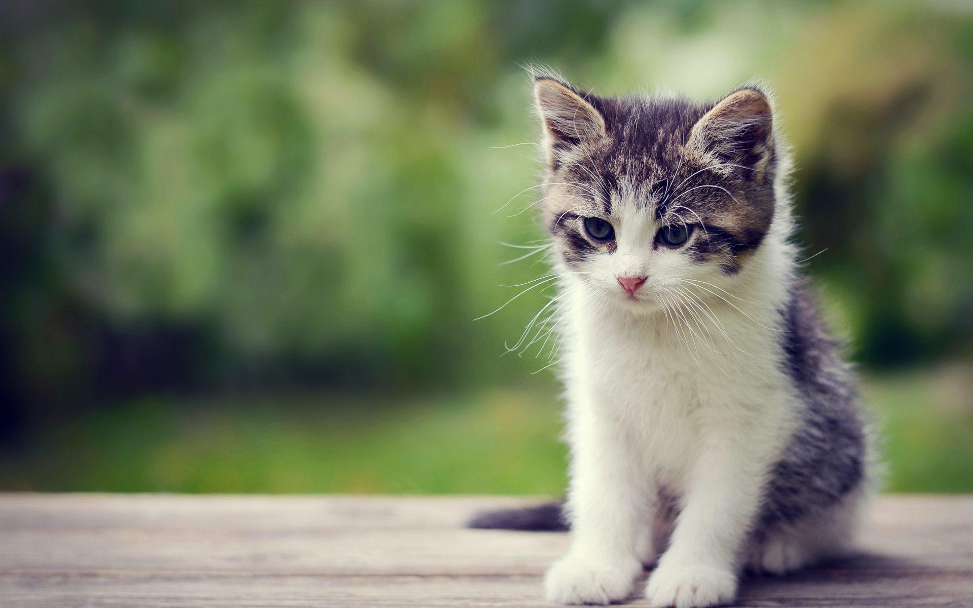 Cute Little Kitten Exclusive HD Wallpapers #6811