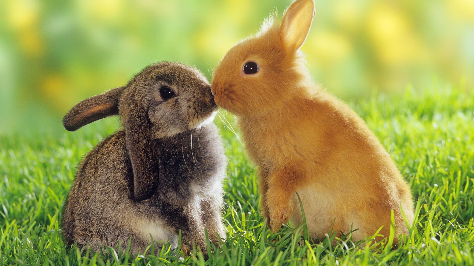 Cute Baby Rabbits Wallpapers