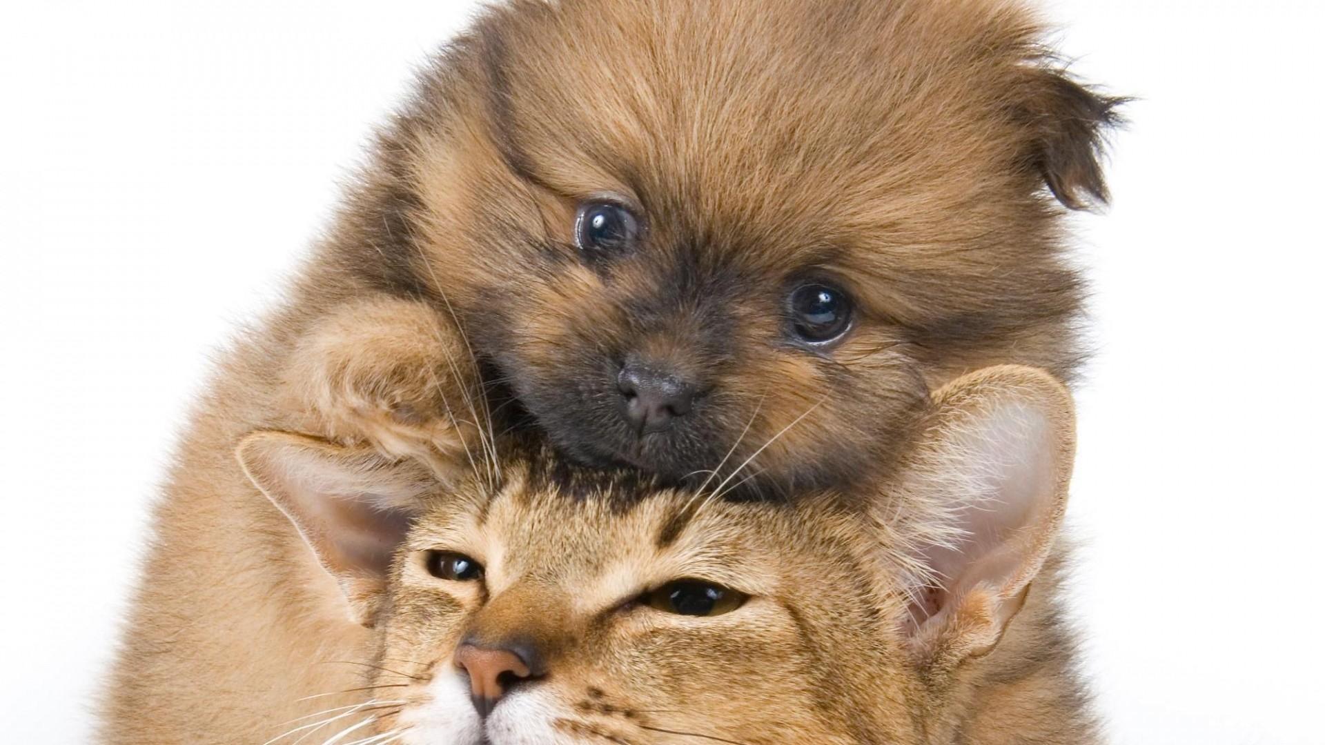 Wallpaper puppy, kitten, face, friendship