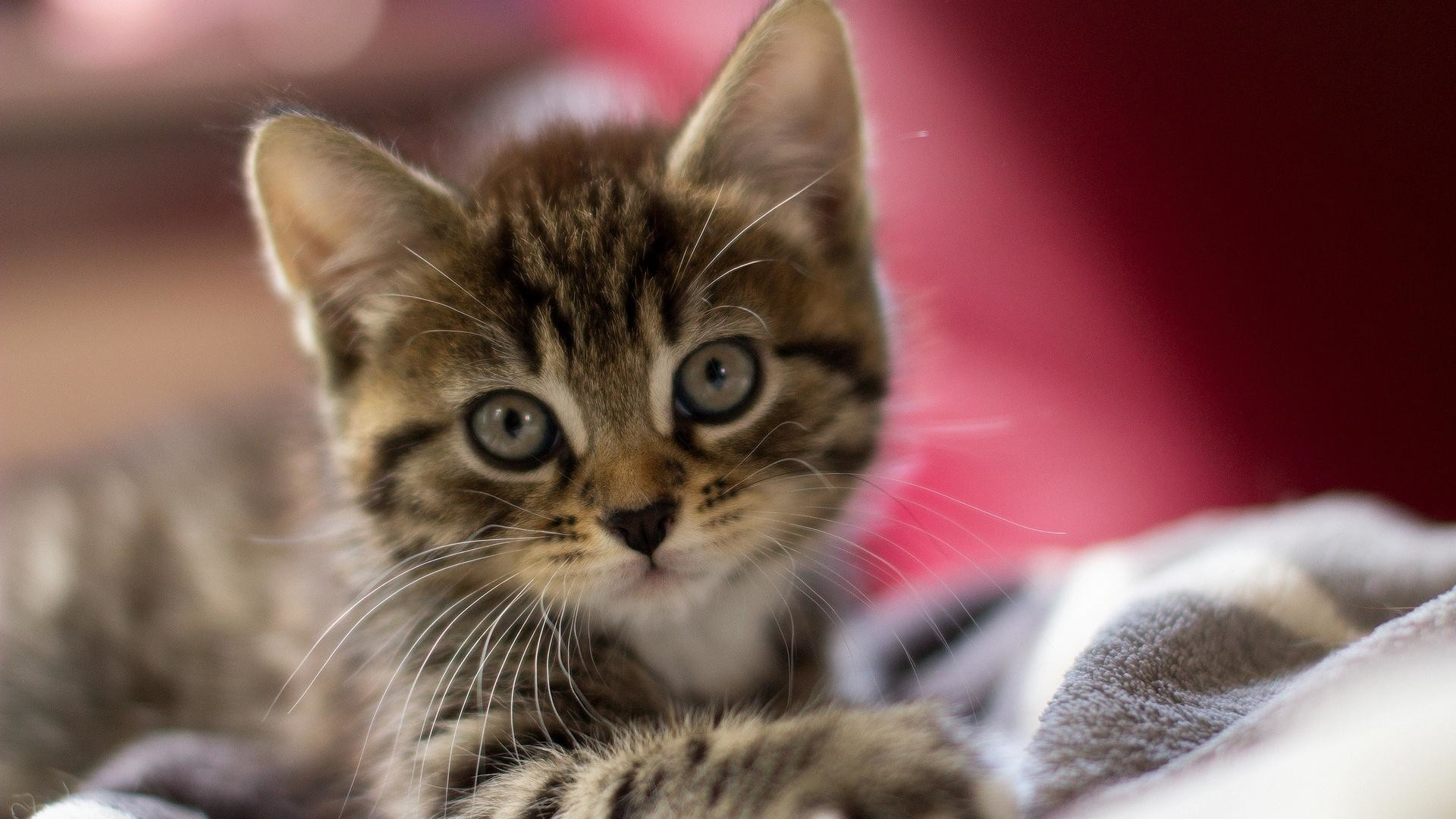 9. cute-kitten-wallpaper9-600×338