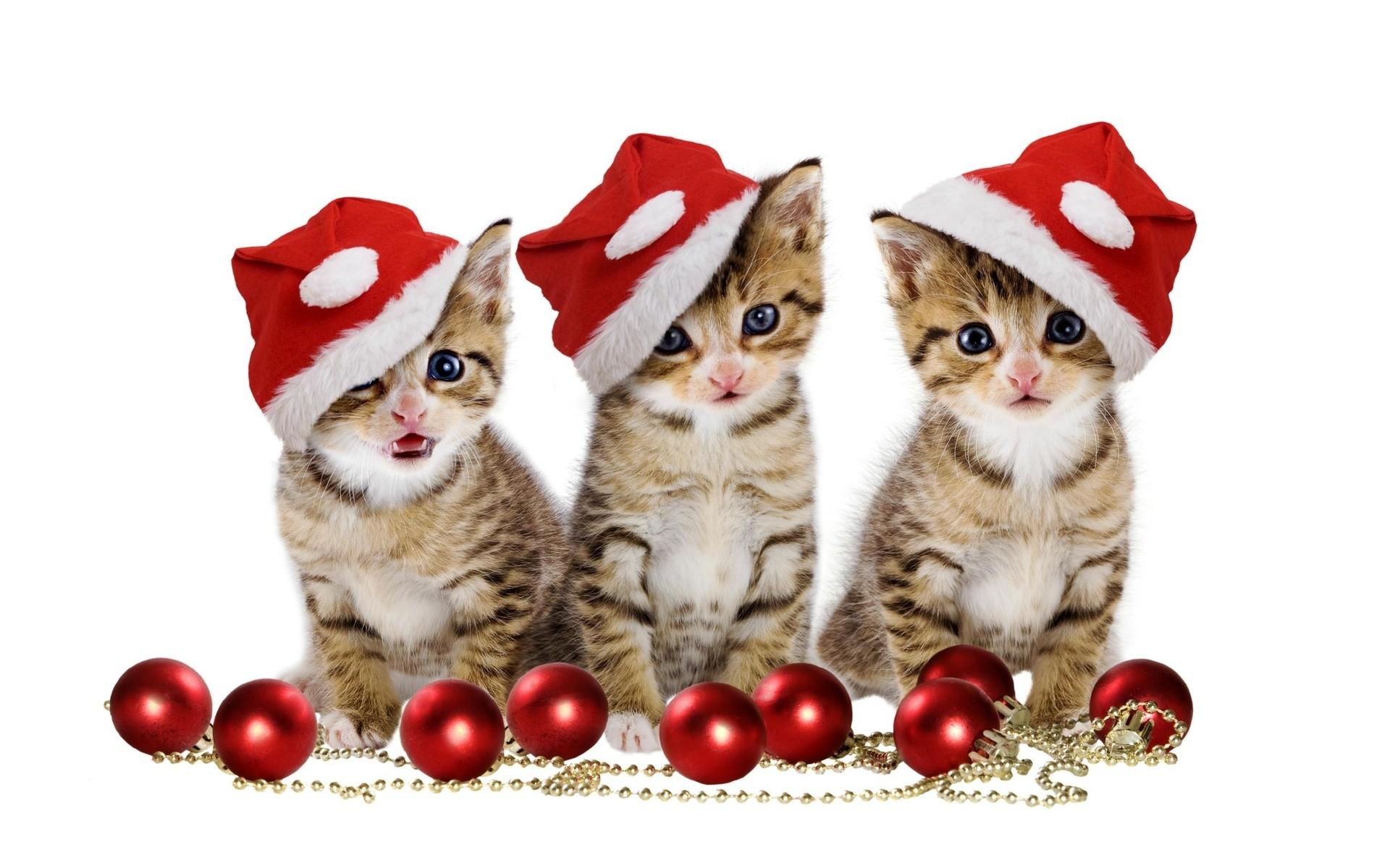 christmas-kittens-holiday-hd-wallpaper-