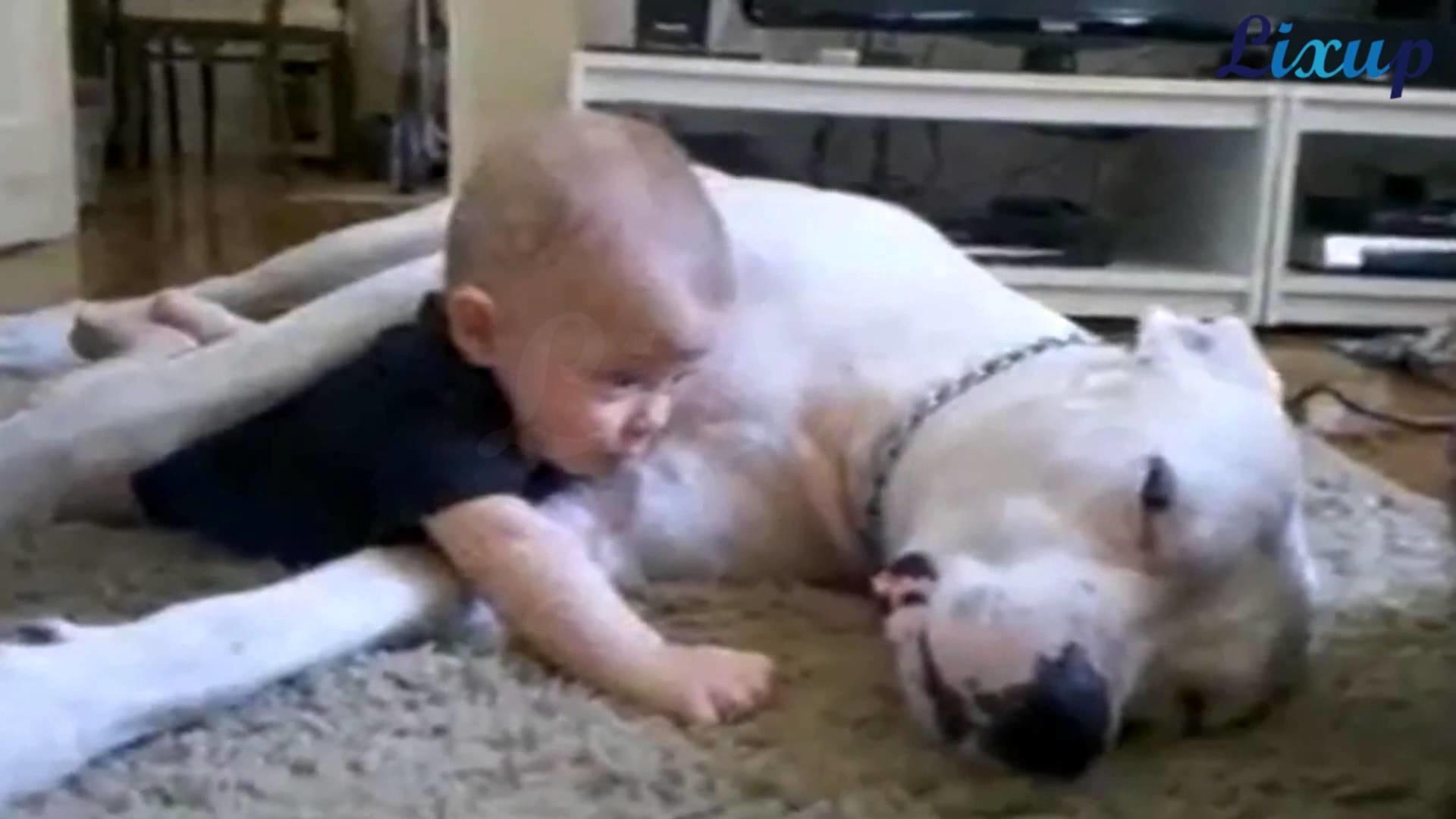 Pit bull hug and Kiss little Baby ! 斗牛拥抱和亲吻小宝宝