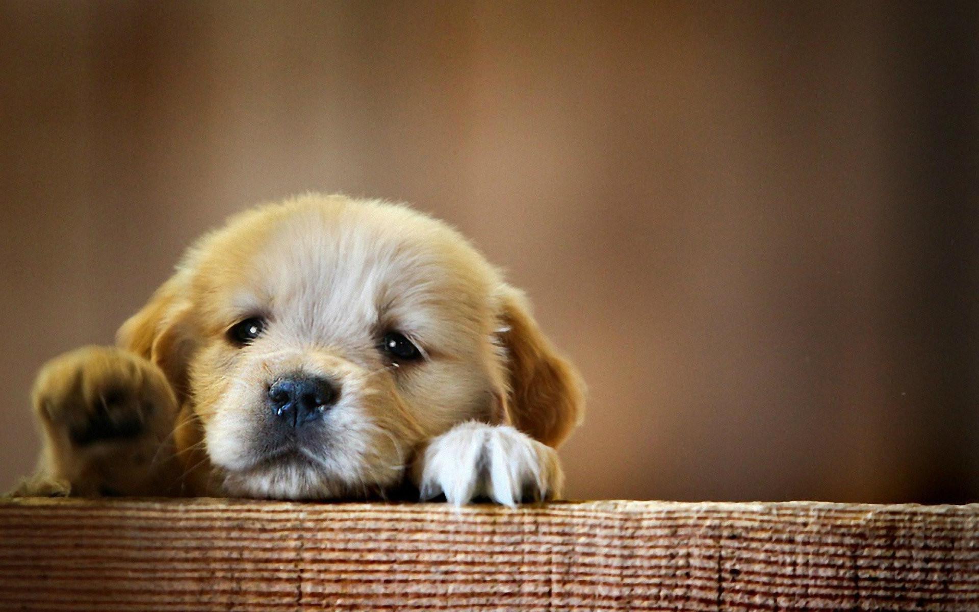 Cute Baby Dog Desktop Wallpapers