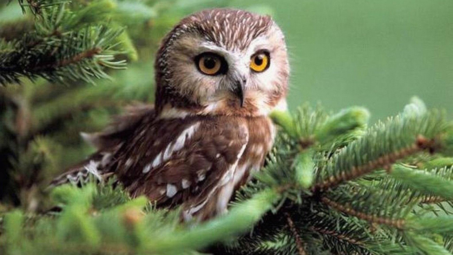 cute owl wallpapers image