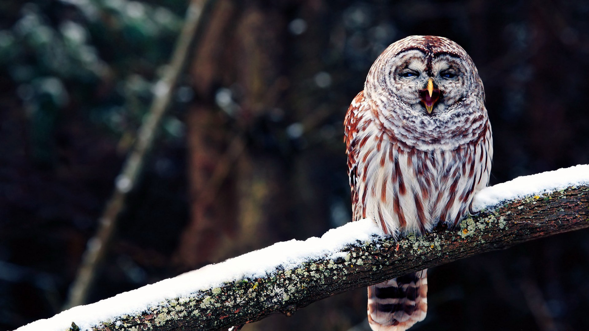 Owl – High Quality HD Wallpapers